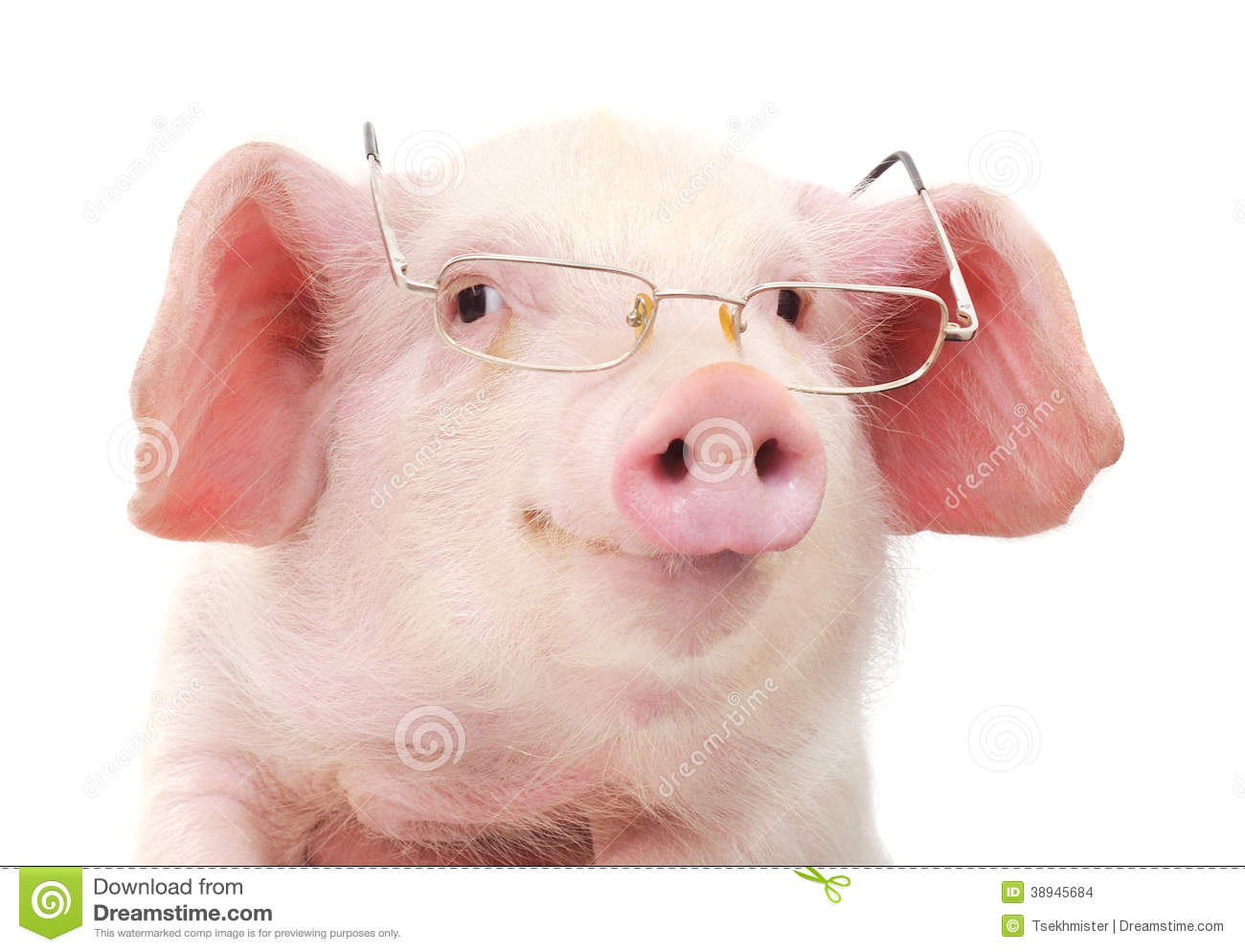 Cute Piglet With Glasses