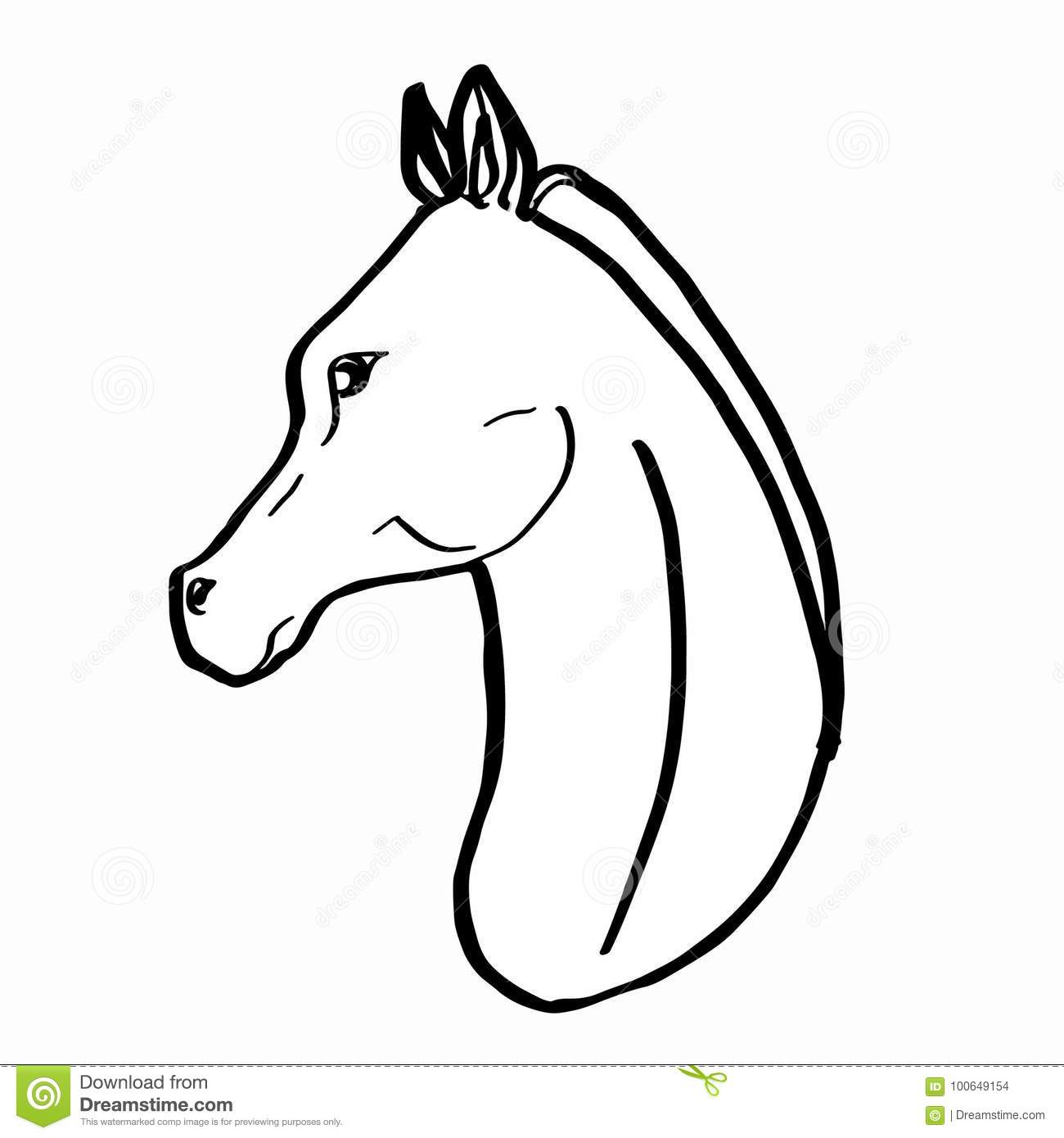 Portrait Realiste De Dessin De Cheval Illustration De Vecteur