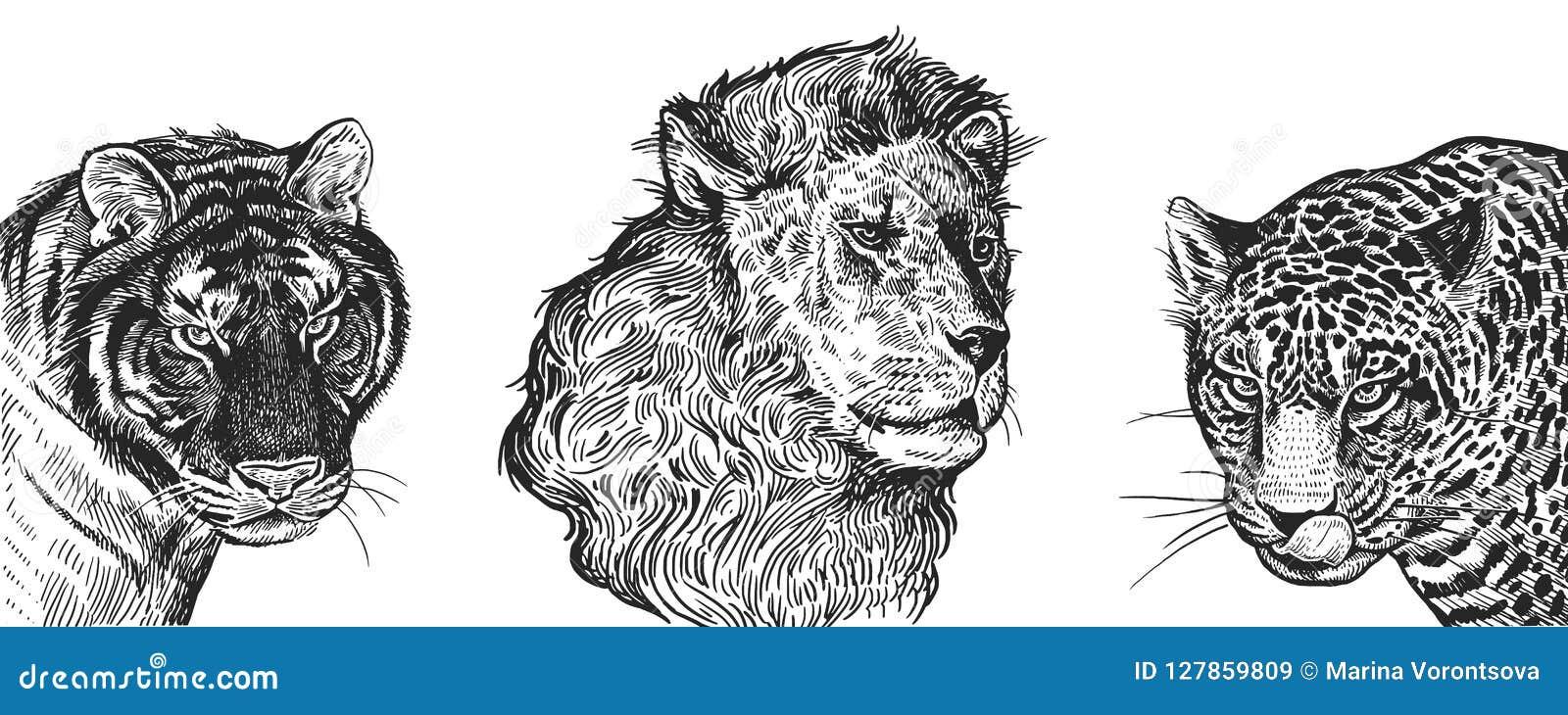Portrait Realiste Des Animaux Africains Lion Tigre Et Jaguar Vi
