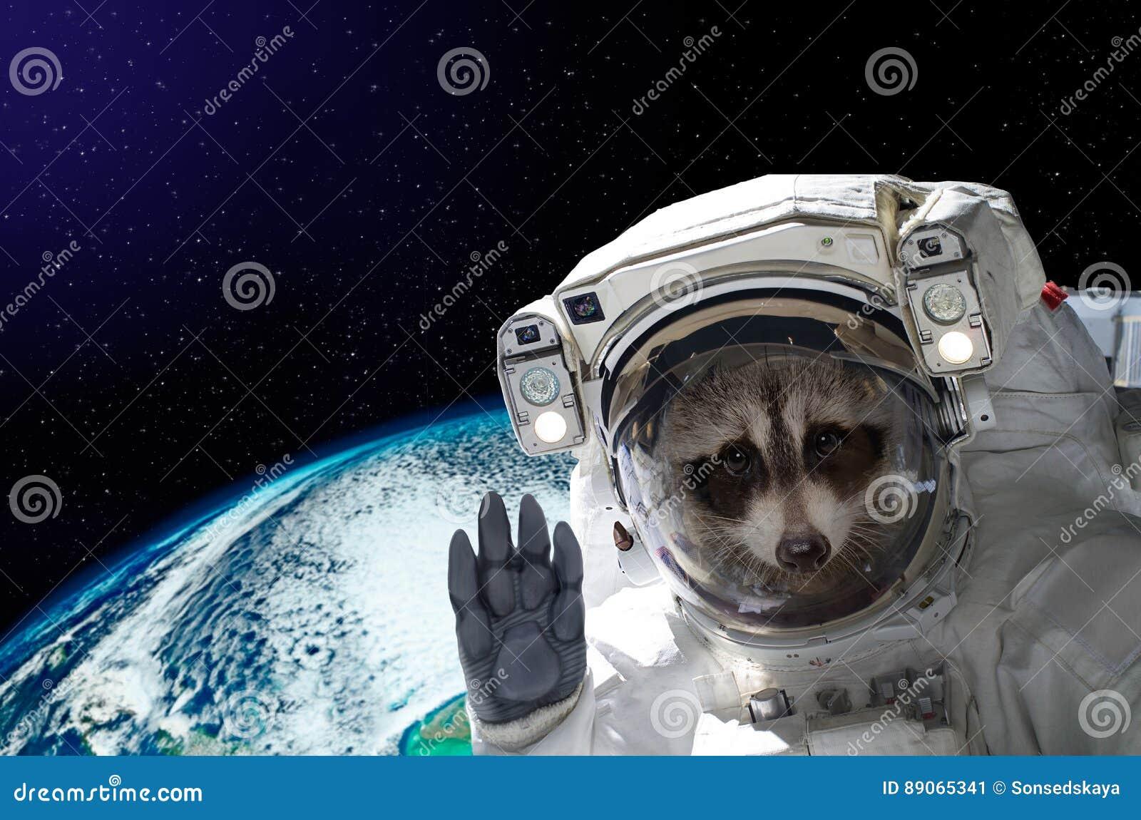 portrait-raccoon-astronaut-space-backgro