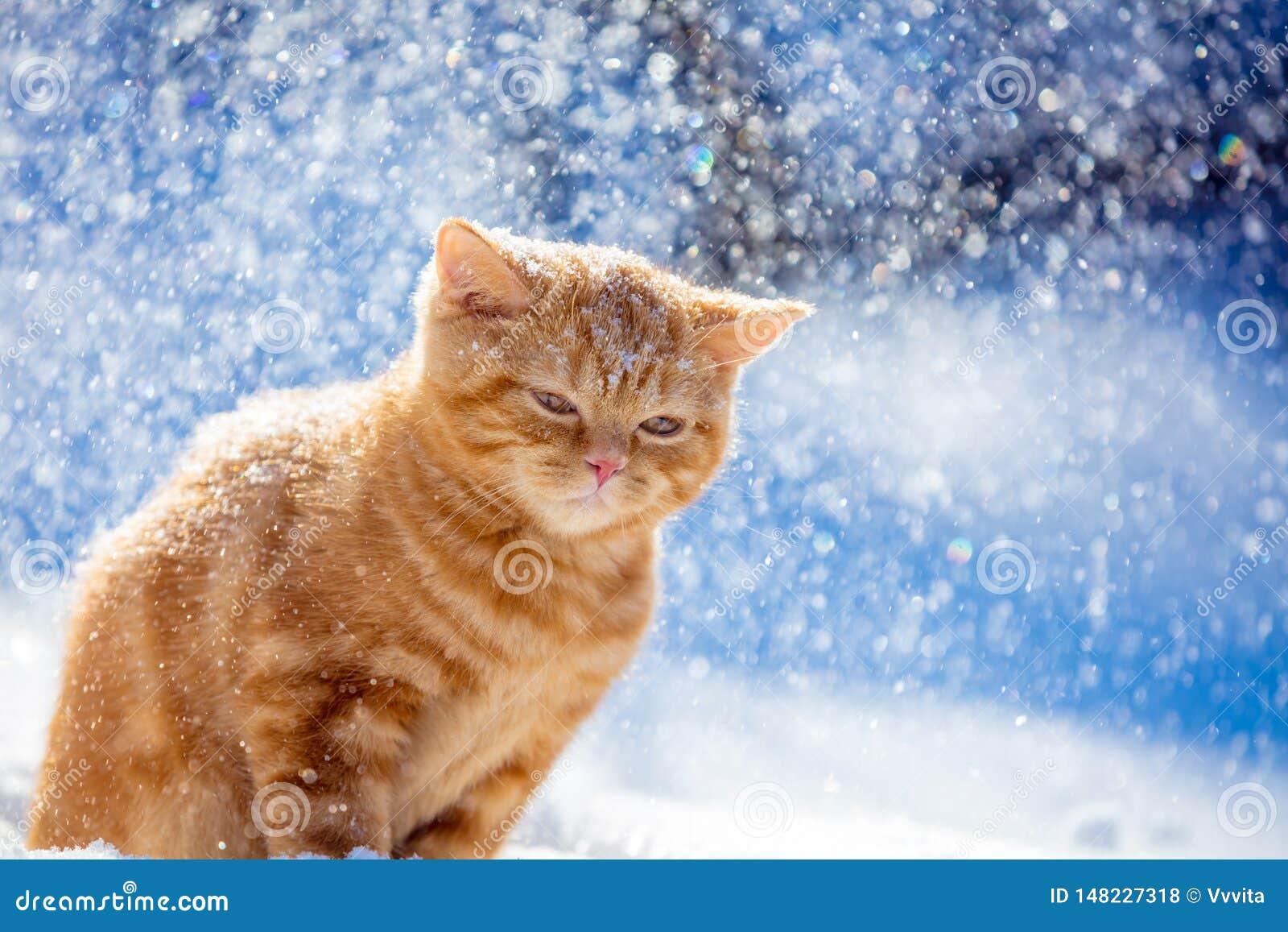 Kitten walking in the snow in the winter in a blizzard