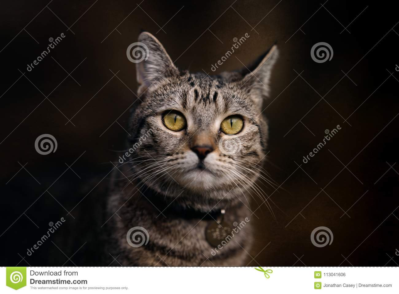 Portrait of Small Tabby Cat