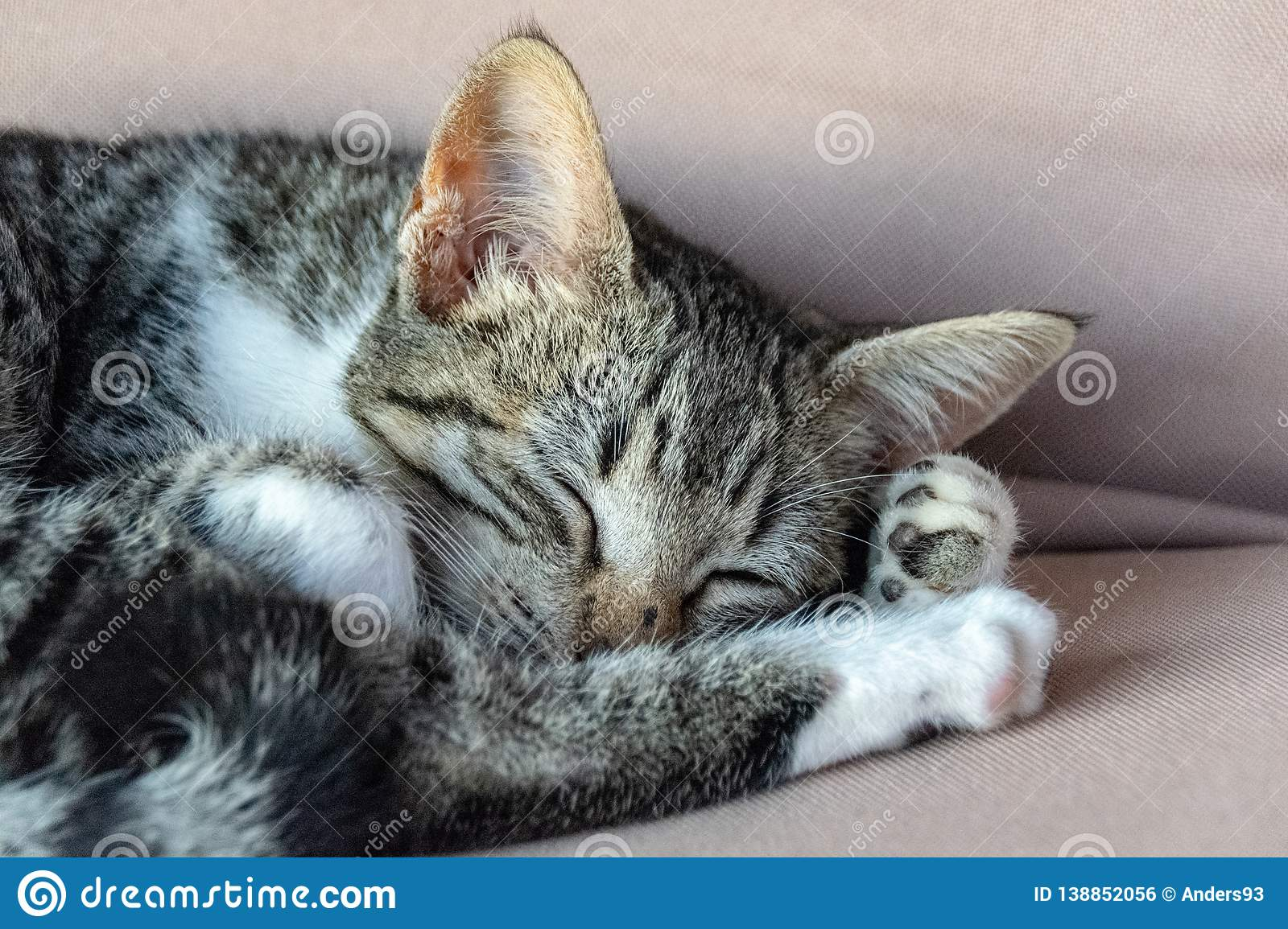 Portrait of a tabby cat curled up asleep