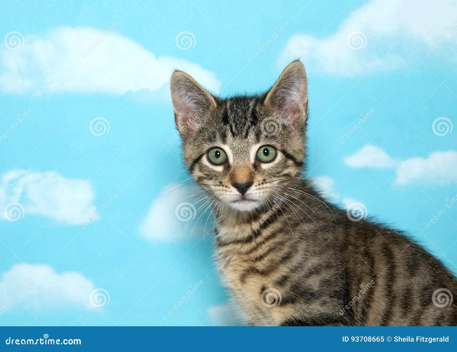 Portrait of a tabby kitten, blue sky background