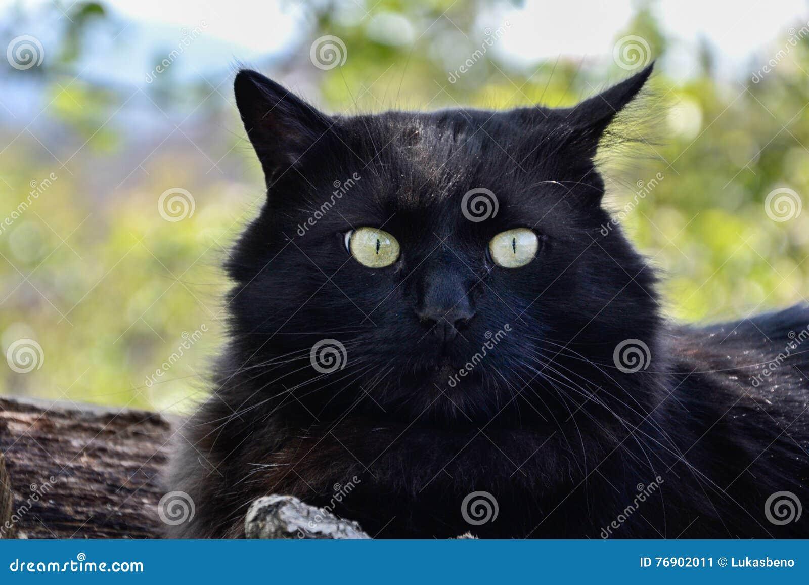 Fat Cat With Big Eyes Cartoon