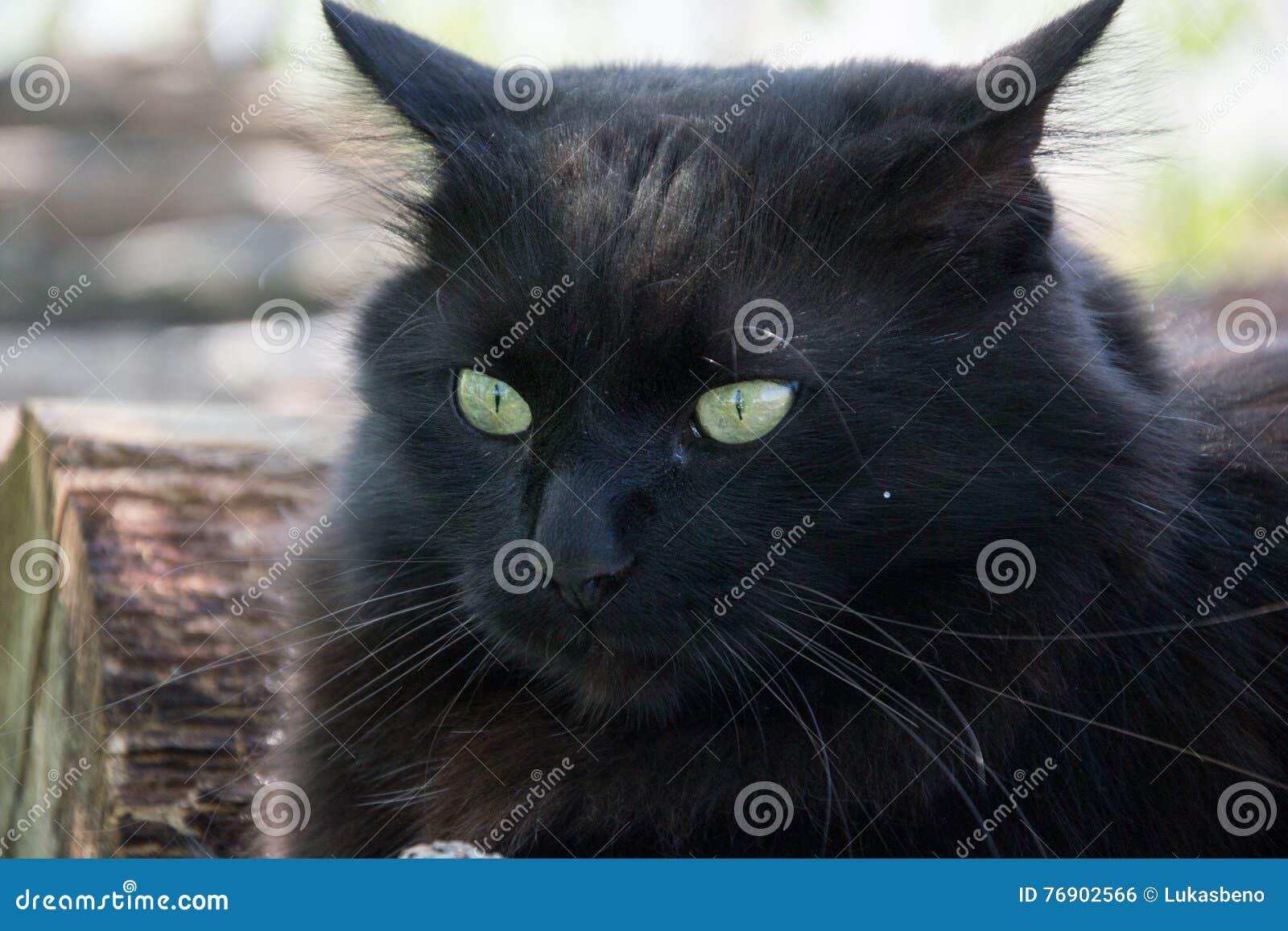 Black Cat Roof Painting