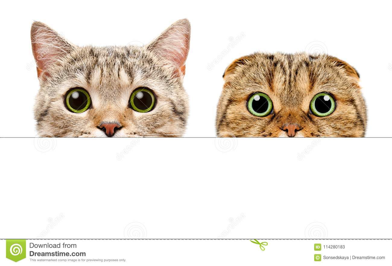 Portrait of a two cats peeking from behind a banner