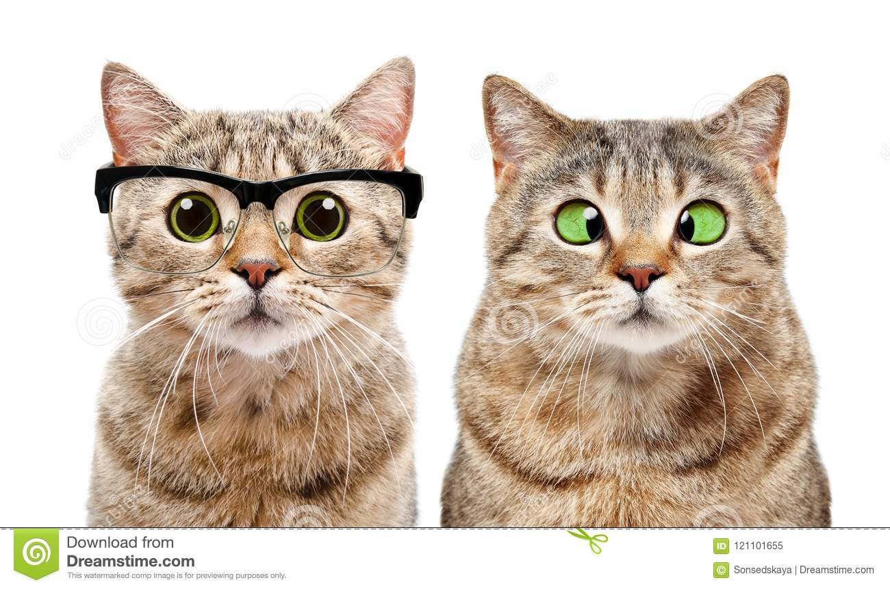Portrait of two cute cats with eye diseases