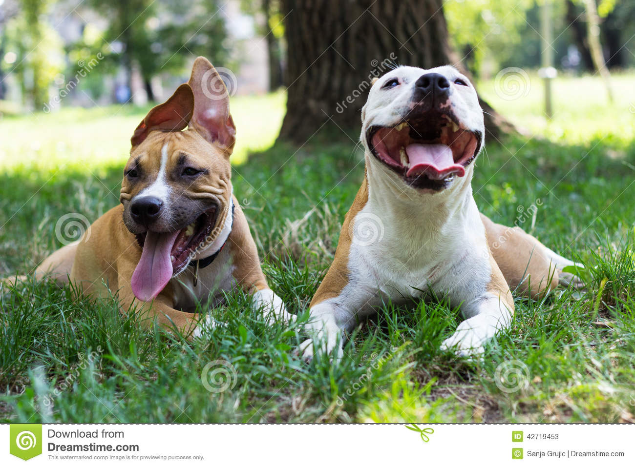 Portrait of two happy dogs in the park