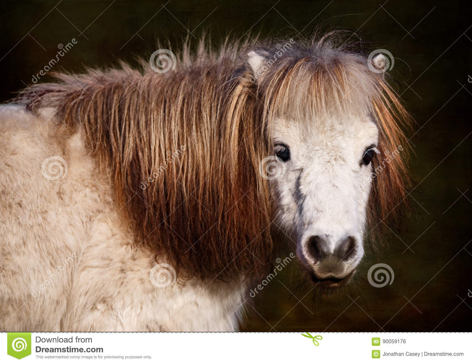 Portrait Of White Pony Stock Photo Image Of Life Near