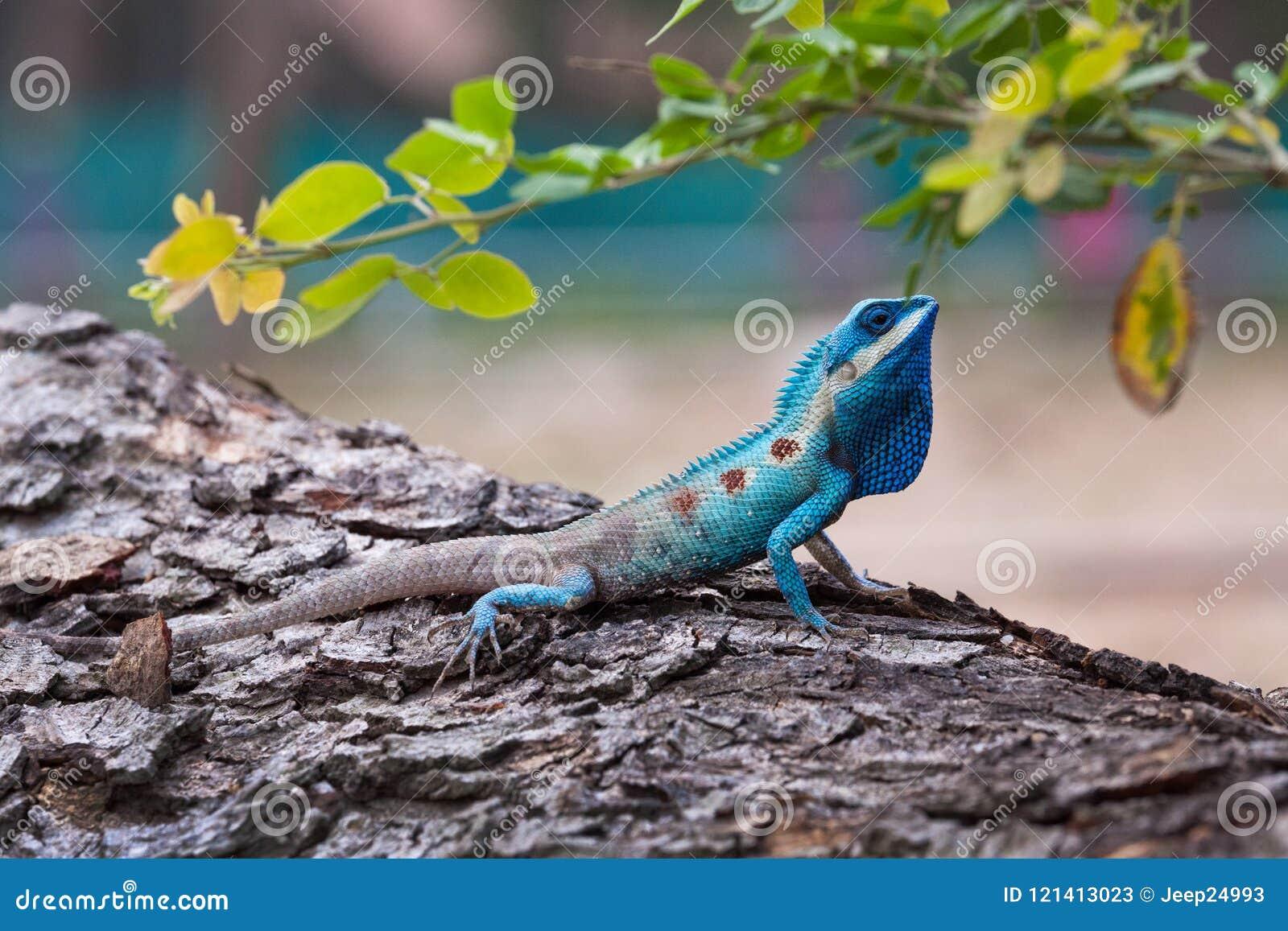 The portrait of wild lizard.