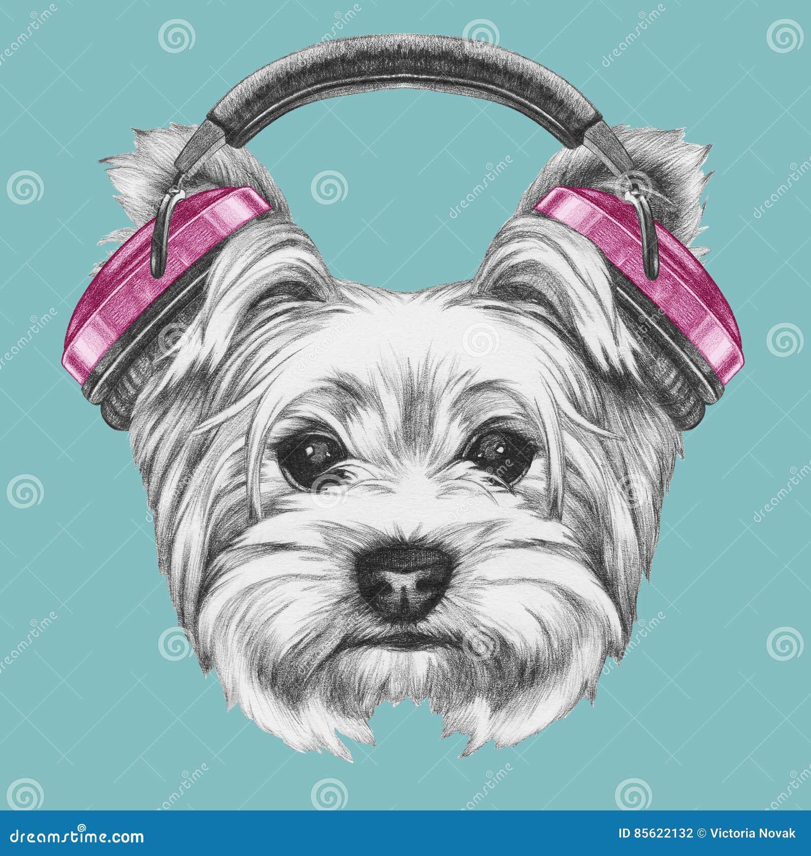 Portrait Of Yorkshire Terrier Dog With Headphones Stock