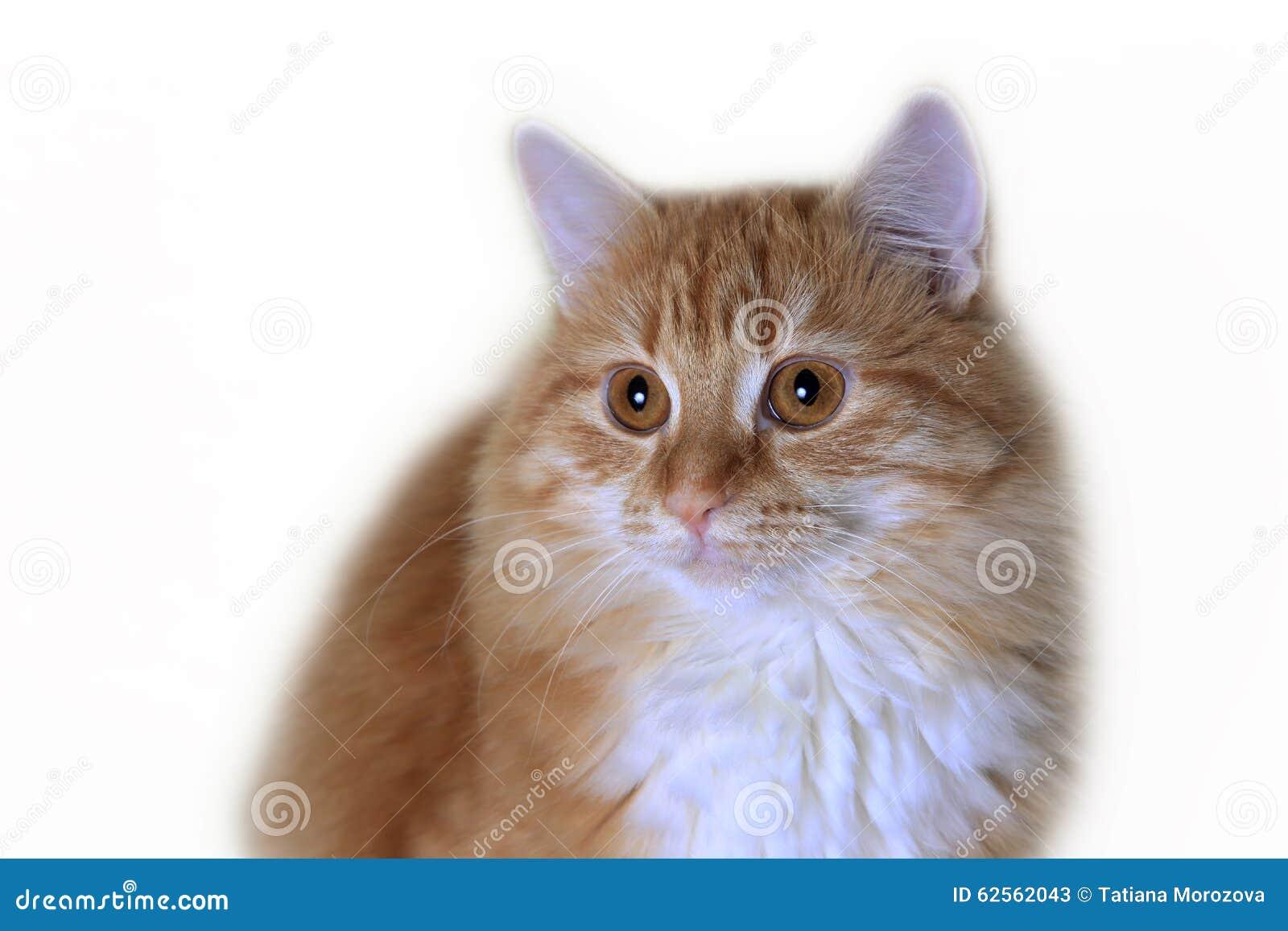 cat stomach problems symptoms