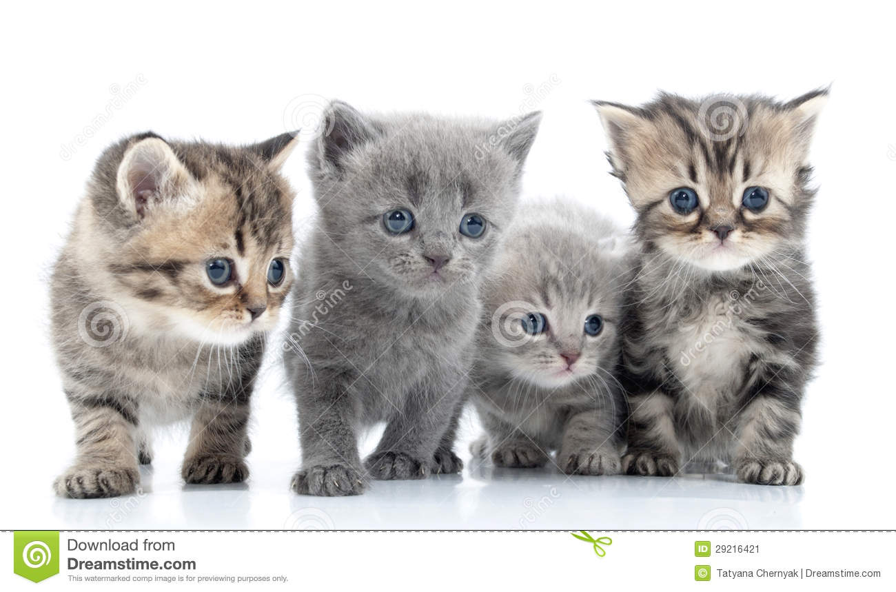 Portrait Of Young Cats' Group . Studio Shot. . Stock Image - Image ...