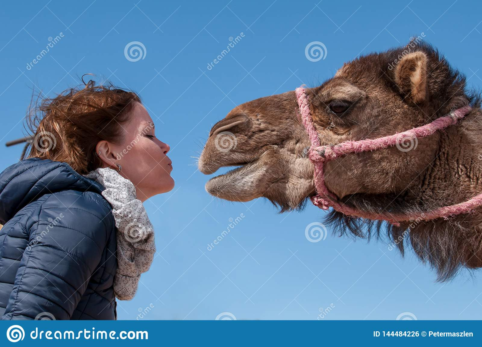 Young woman fell in Love with dromedary in Morocco