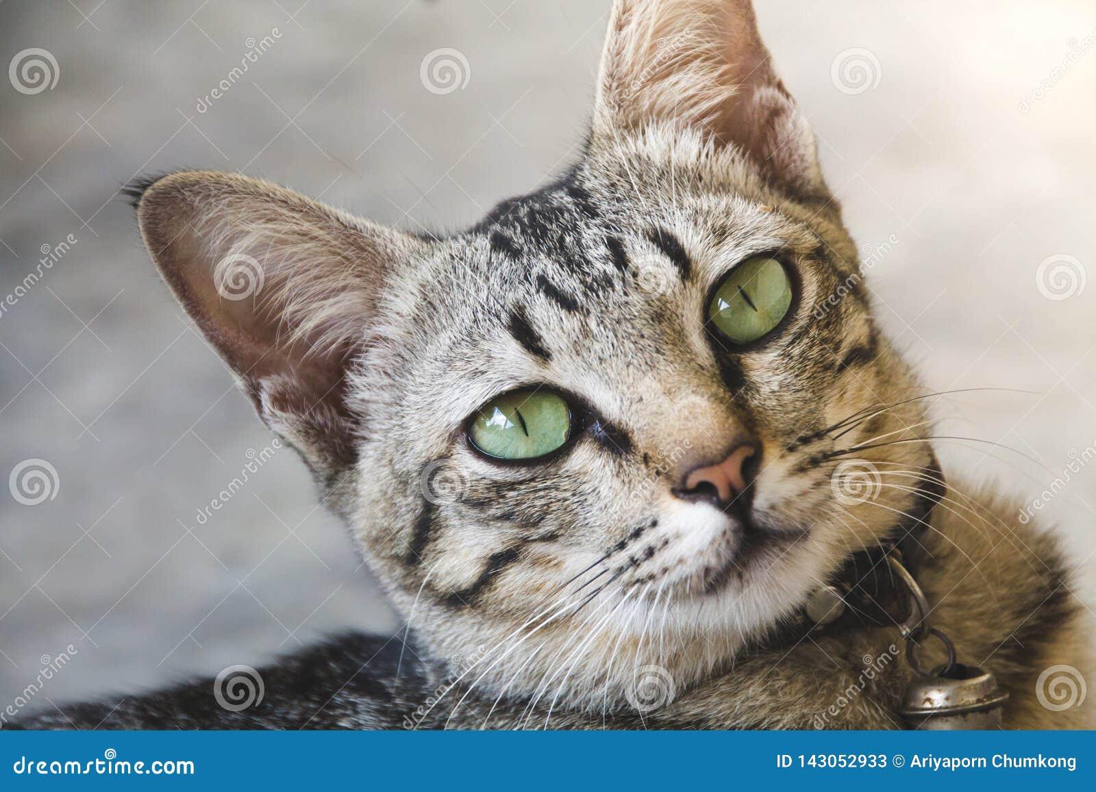 Portret śliczny kot