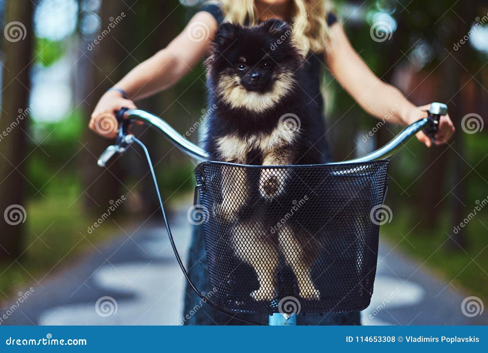 Portret blondynki dziewczyna w przypadkowej sukni troszkę, chwyta spitz śliczny pies Przejażdżka na bicyklu w parku