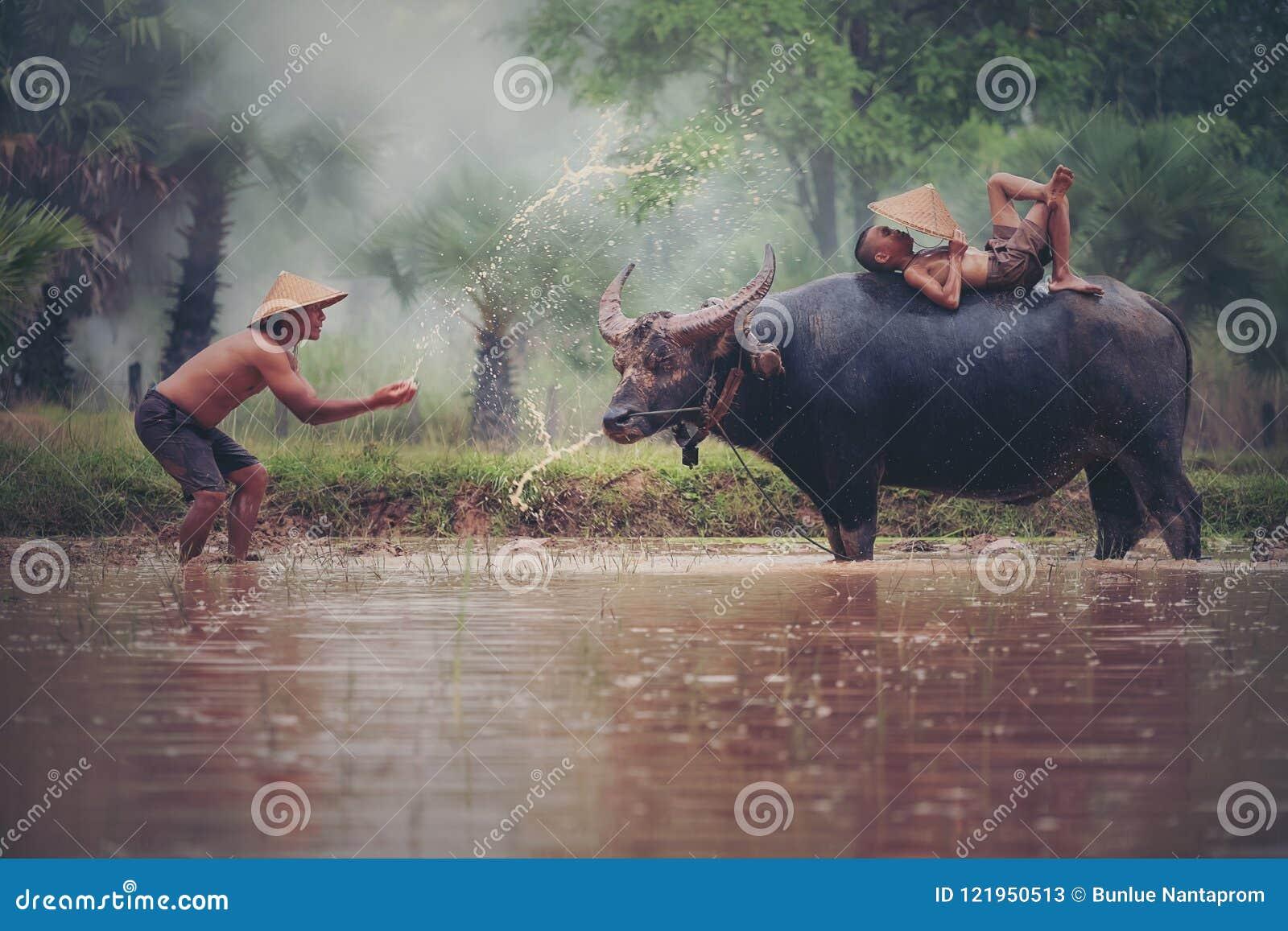 Portret cieszy się bawić się z bizonem Azjatycka chłopiec rolnik