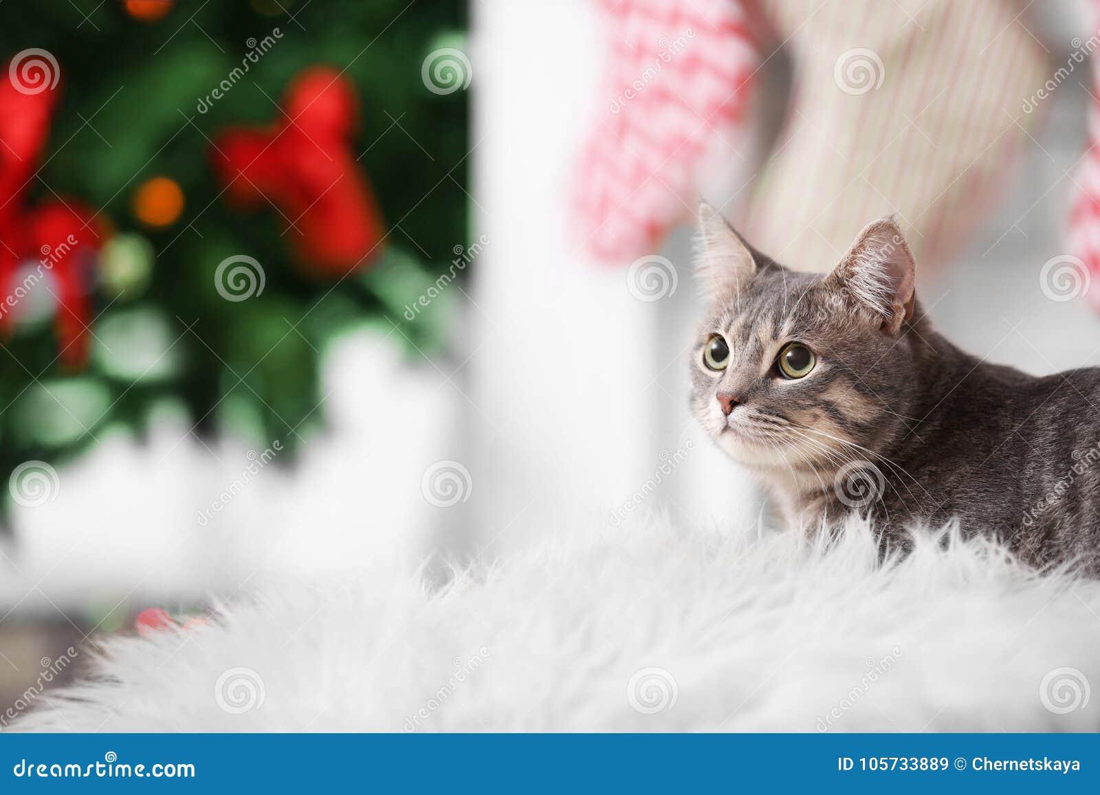 Portret die van gestreepte katkat op witte plaid liggen