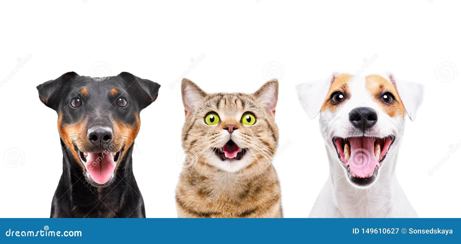 Portret dwa ślicznego psa i śmiesznego kot
