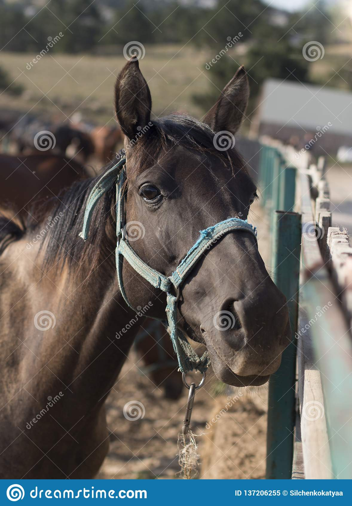 Portret koński portret