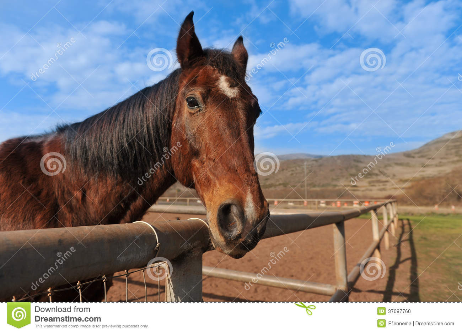 Download Portret Koń Outdoors W Polu Zdjęcie Stock - Obraz złożonej z natura, sport: 37087760