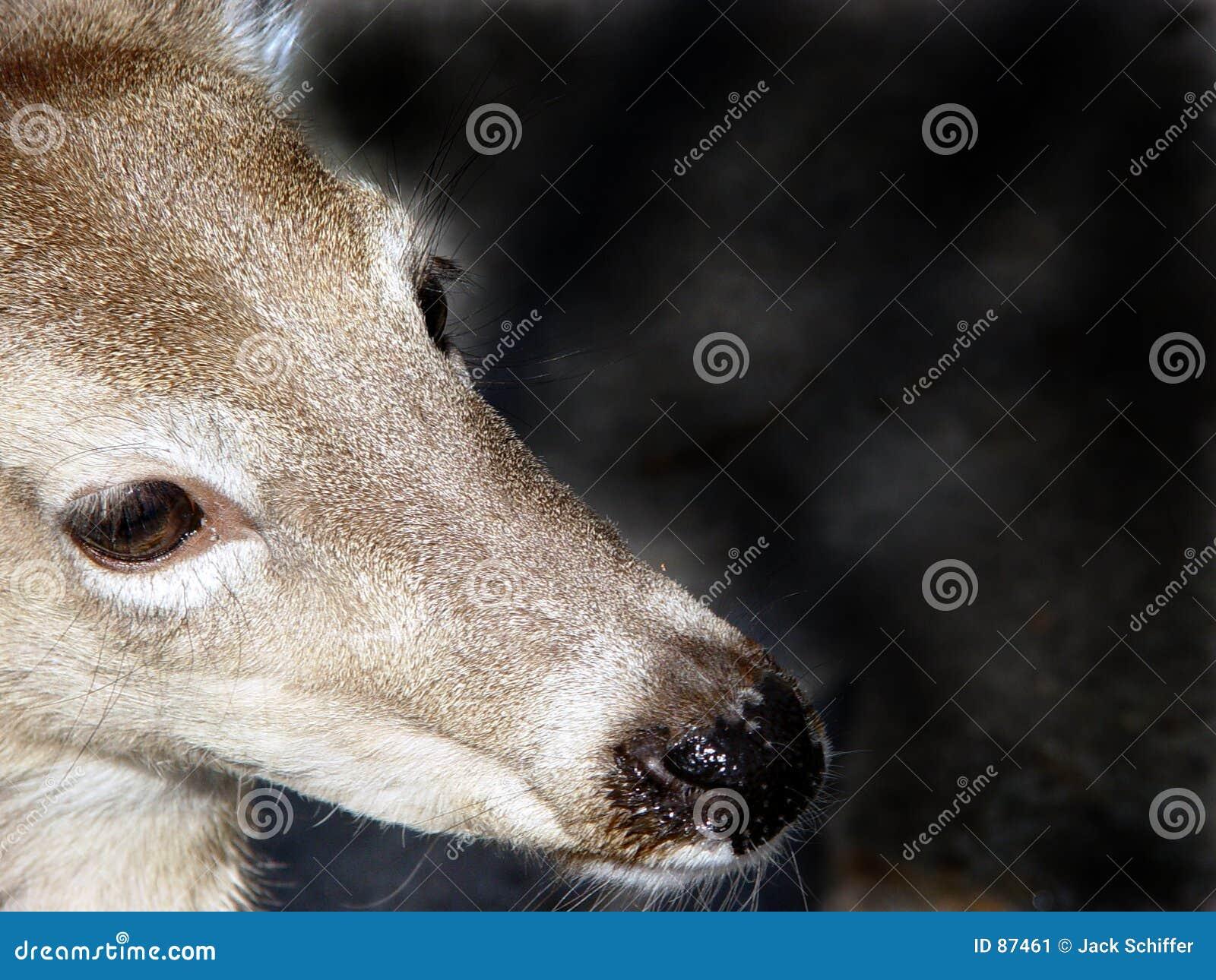 Portret na jelenie