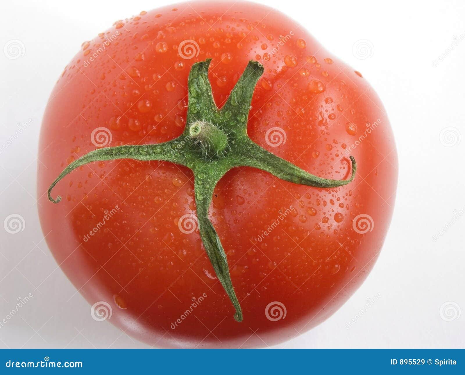 Portret pomidora iii