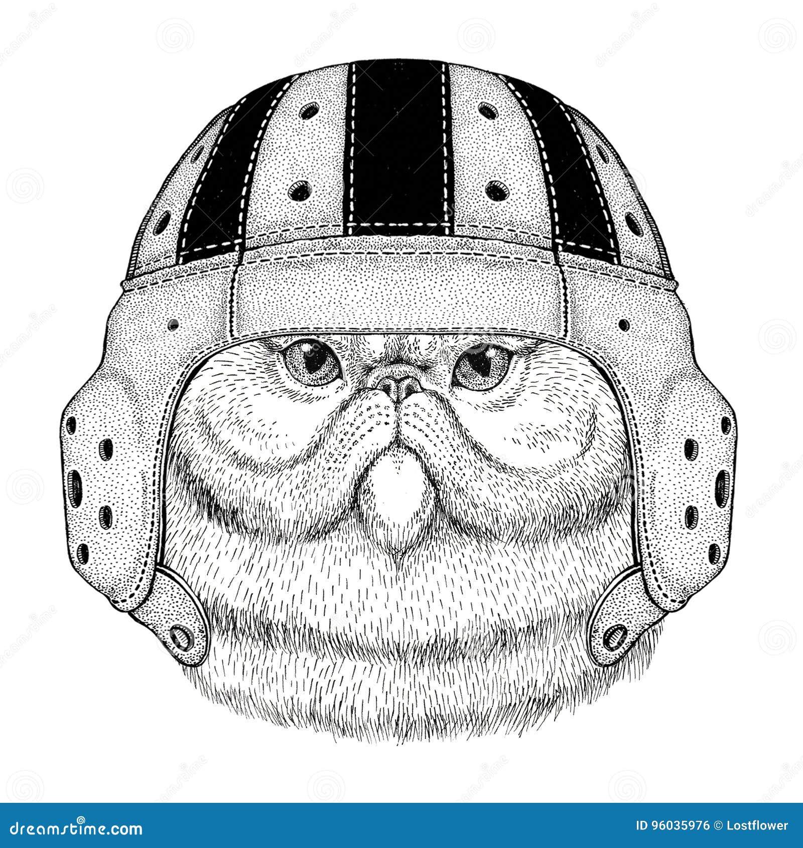 Portret puszysty perskiego kota dzikie zwierzę jest ubranym rugby hełma sporta ilustrację