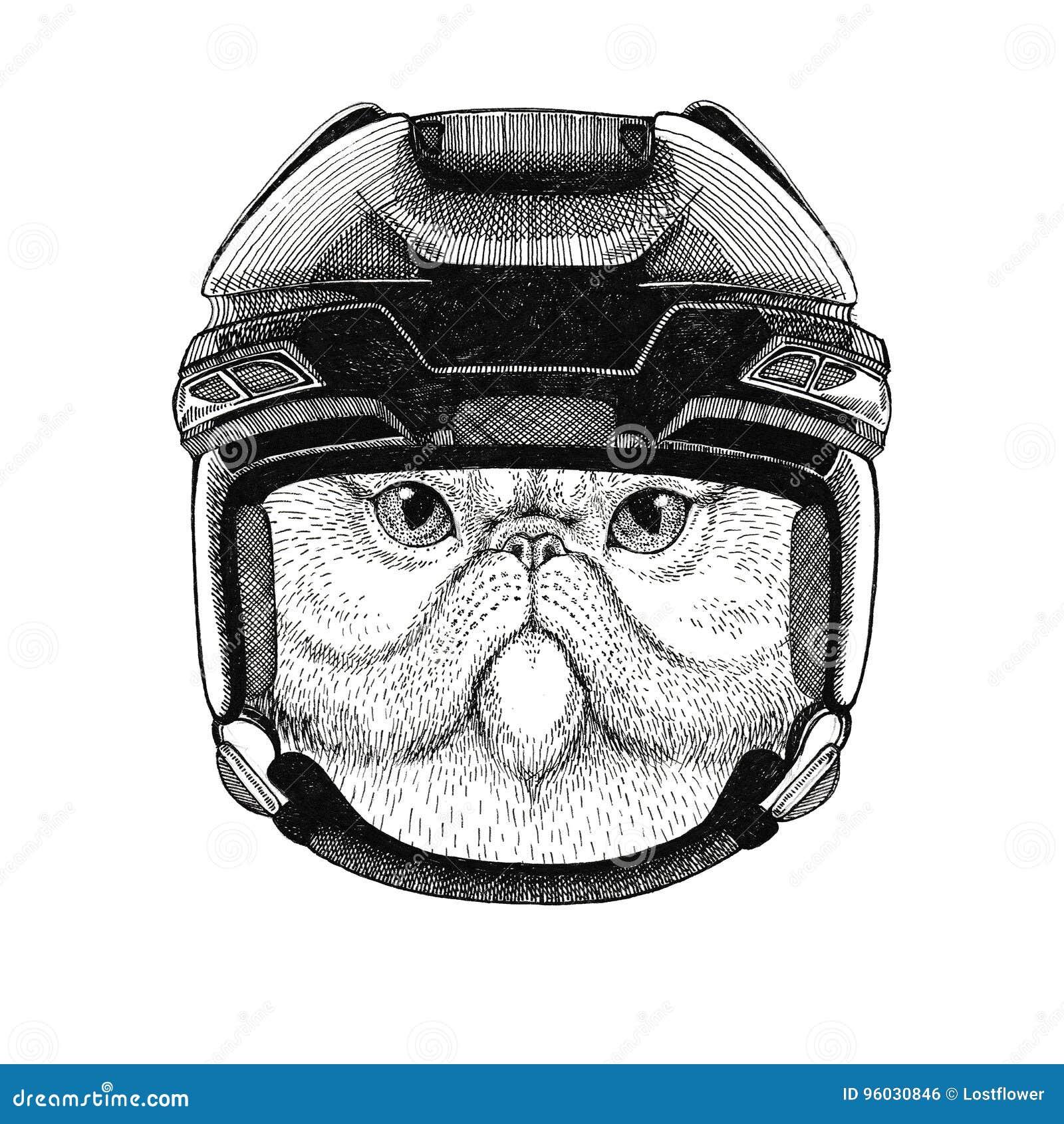 Portret puszysty perskiego kota wizerunku Hokejowy dzikie zwierzę jest ubranym hokejowego hełma sporta zimy sporta zwierzęcego Ho