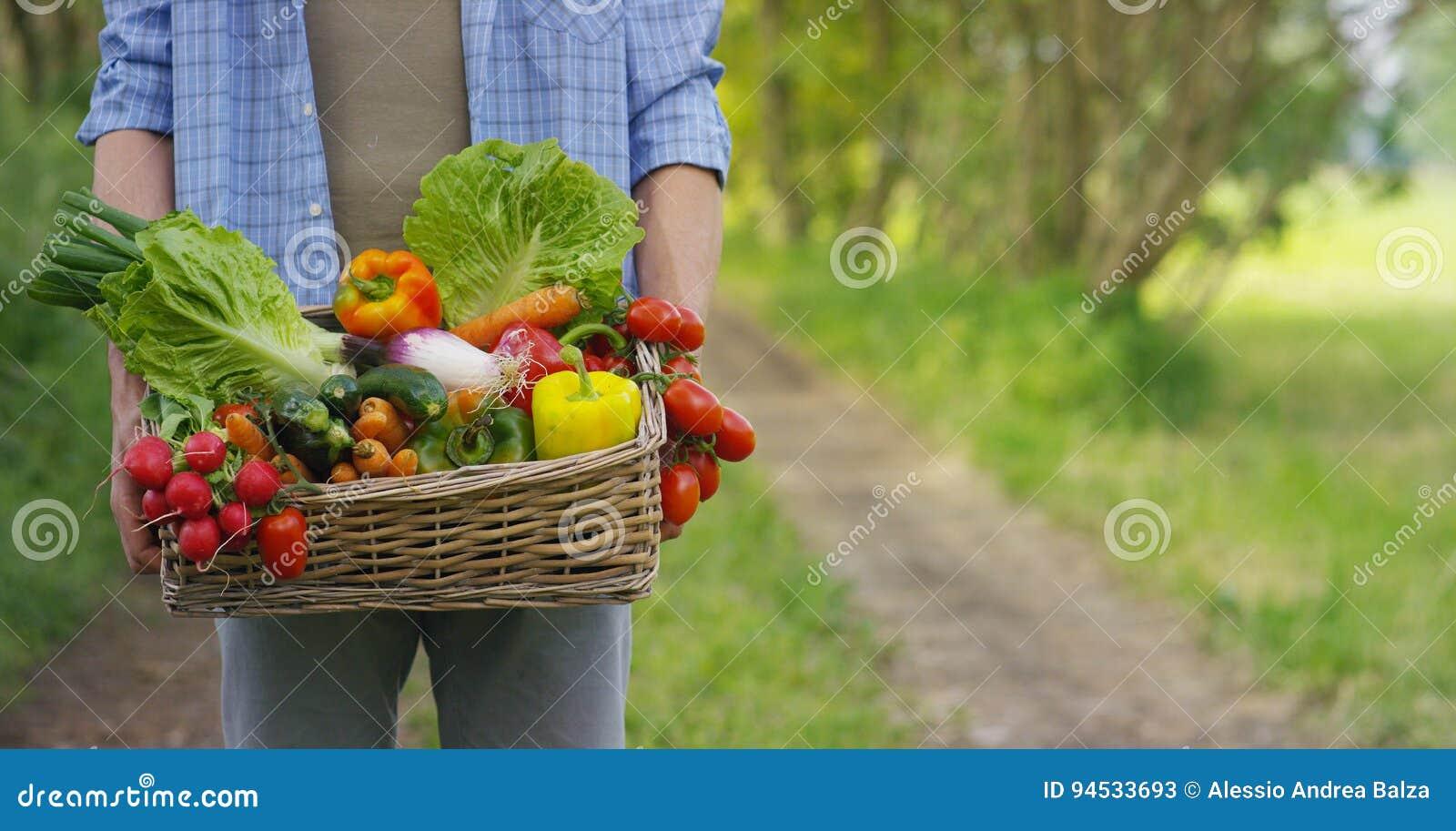 Portret szczęśliwego młodego średniorolnego mienia świezi warzywa w koszu Na tle natura pojęcie biologiczny, życiorys pr,