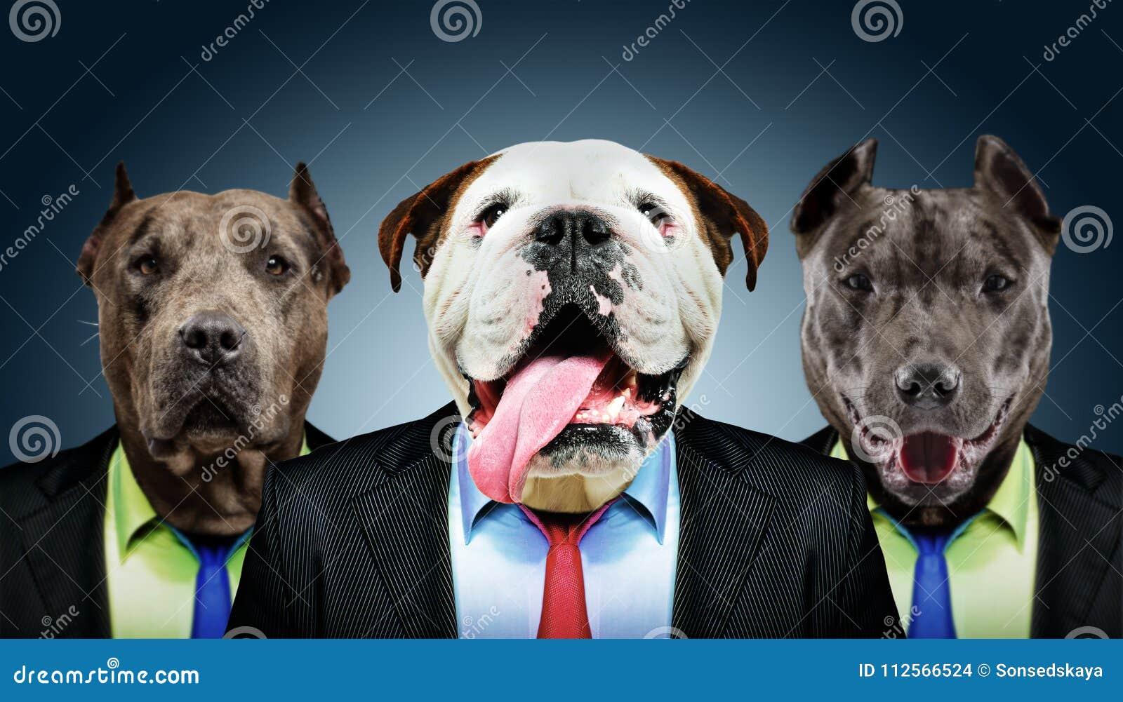 Portret trzy biznesowego psa