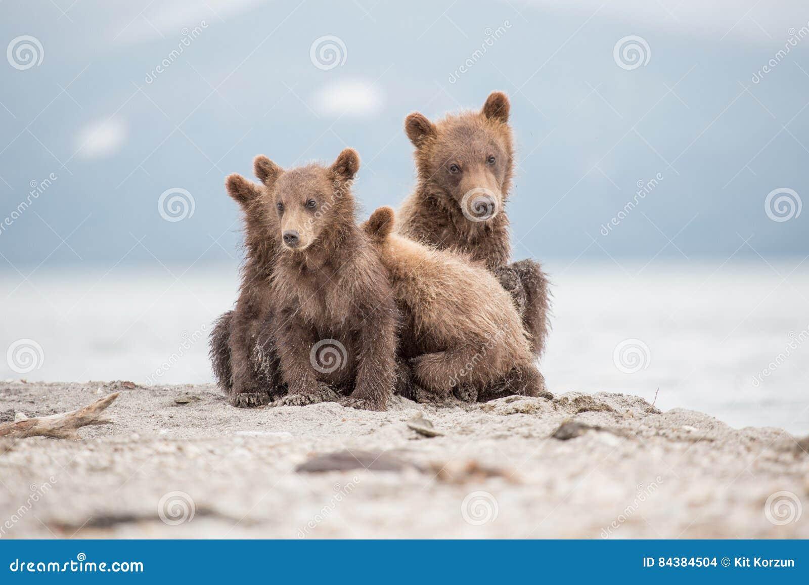 Portret uroczy mali niedźwiedzie