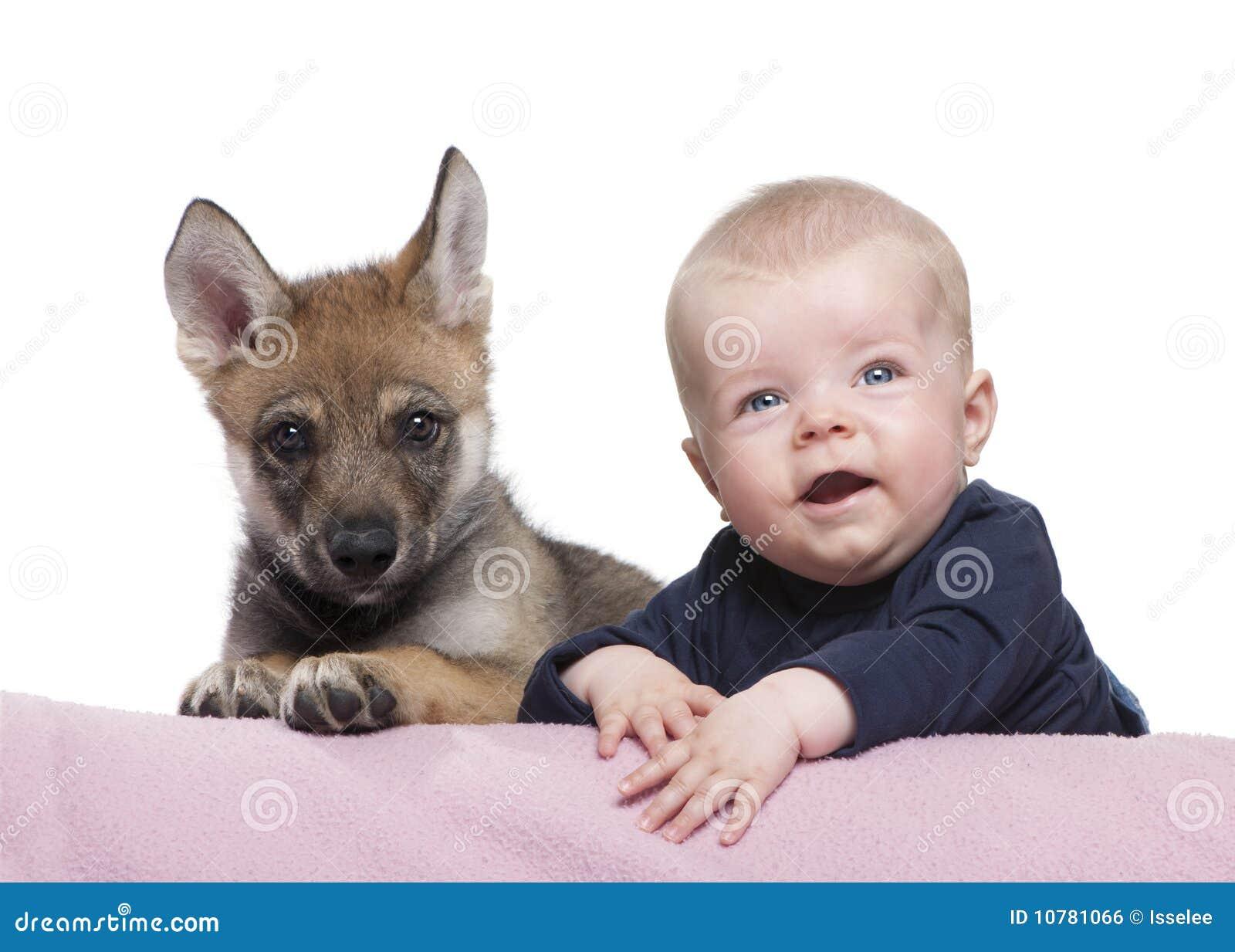Portret van babyjongen met Jonge Europese wolf