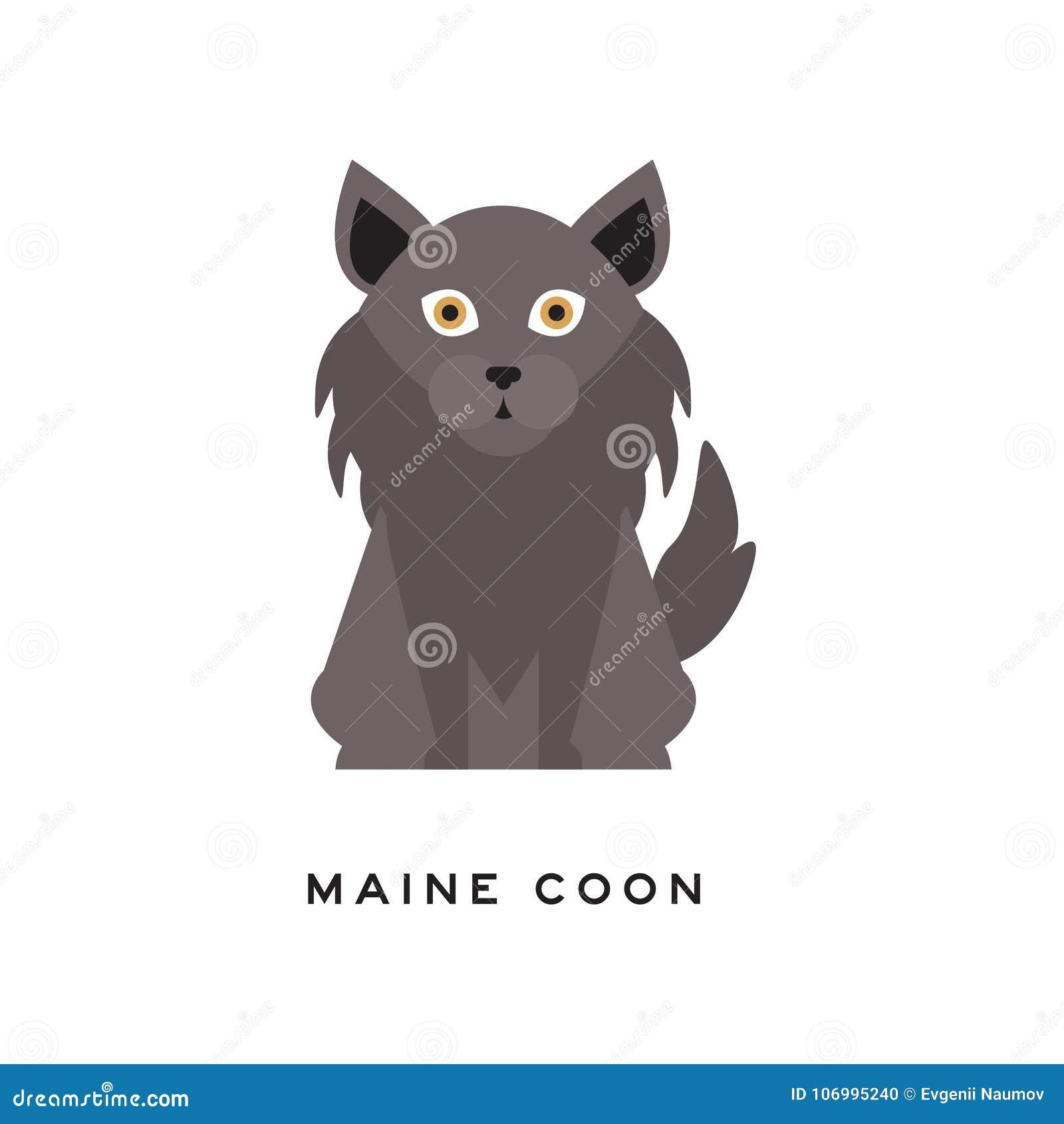 Portret van de kat van de Wasbeer van Maine Aanbiddelijke katachtig met grijze lange laag, kemphaan rond hals en grote bruine oge