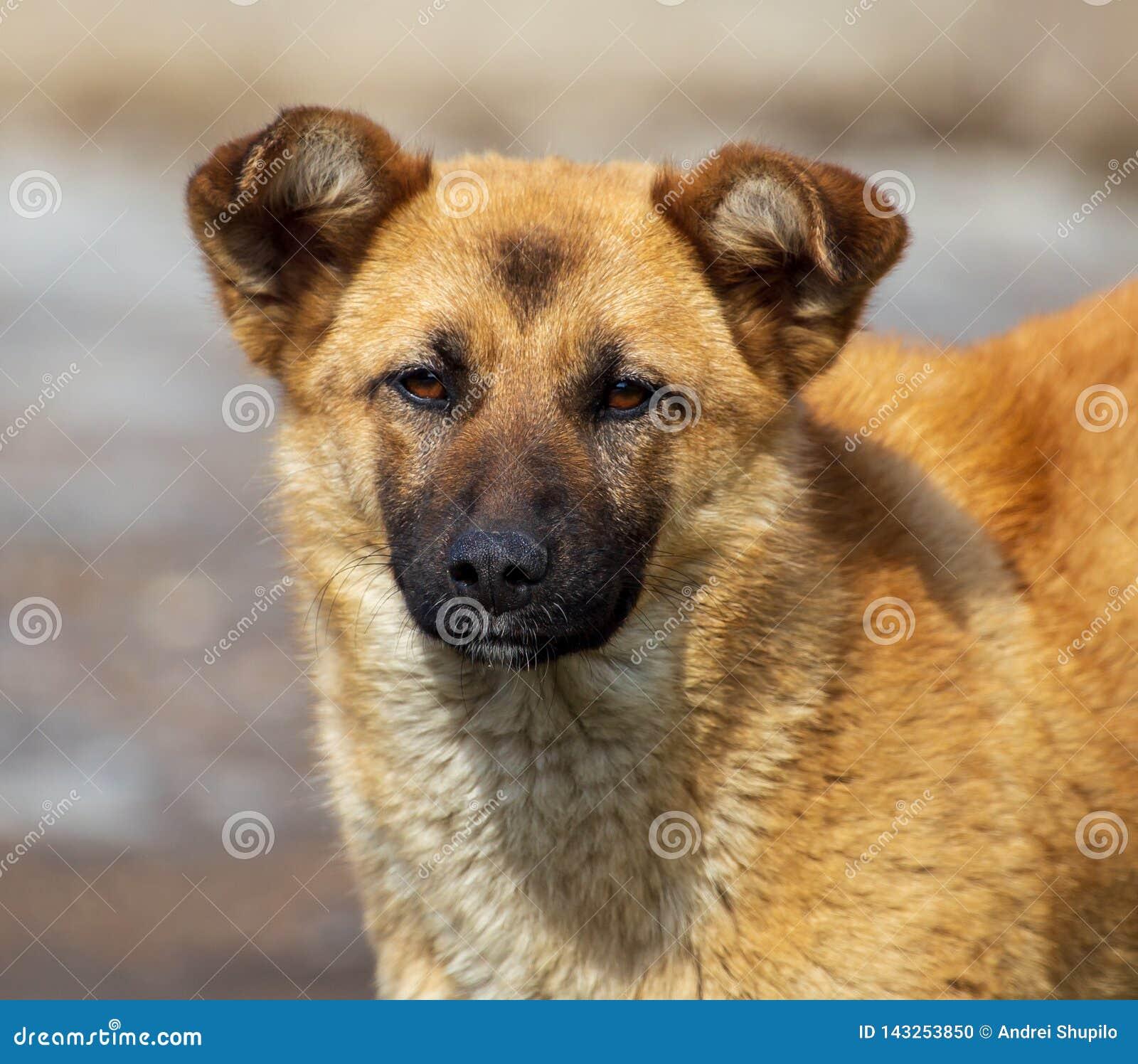 Portret van een hond in de middag