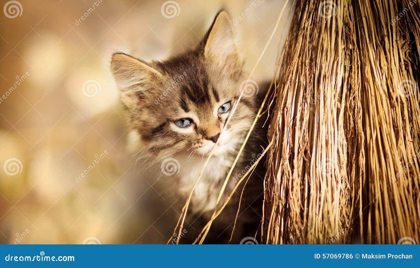 Portret van een katje met een bezem