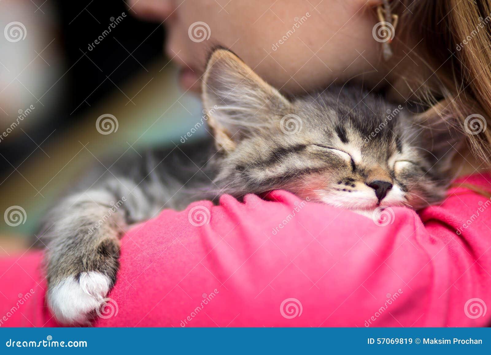Portret van een leuke katjesslaap op schouder