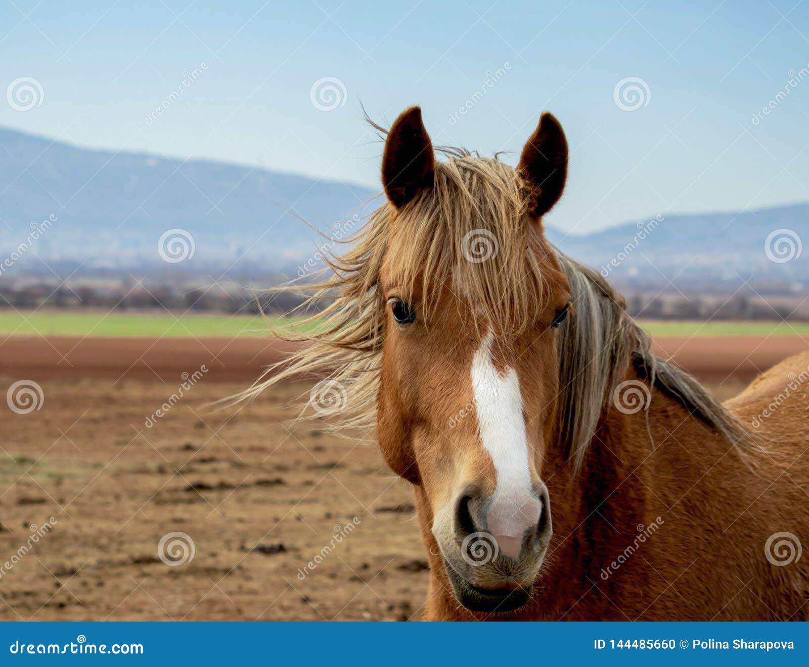 Portret van een mooi paard met slimme ogen, de briljante paardmanen die op de lucht bespatten