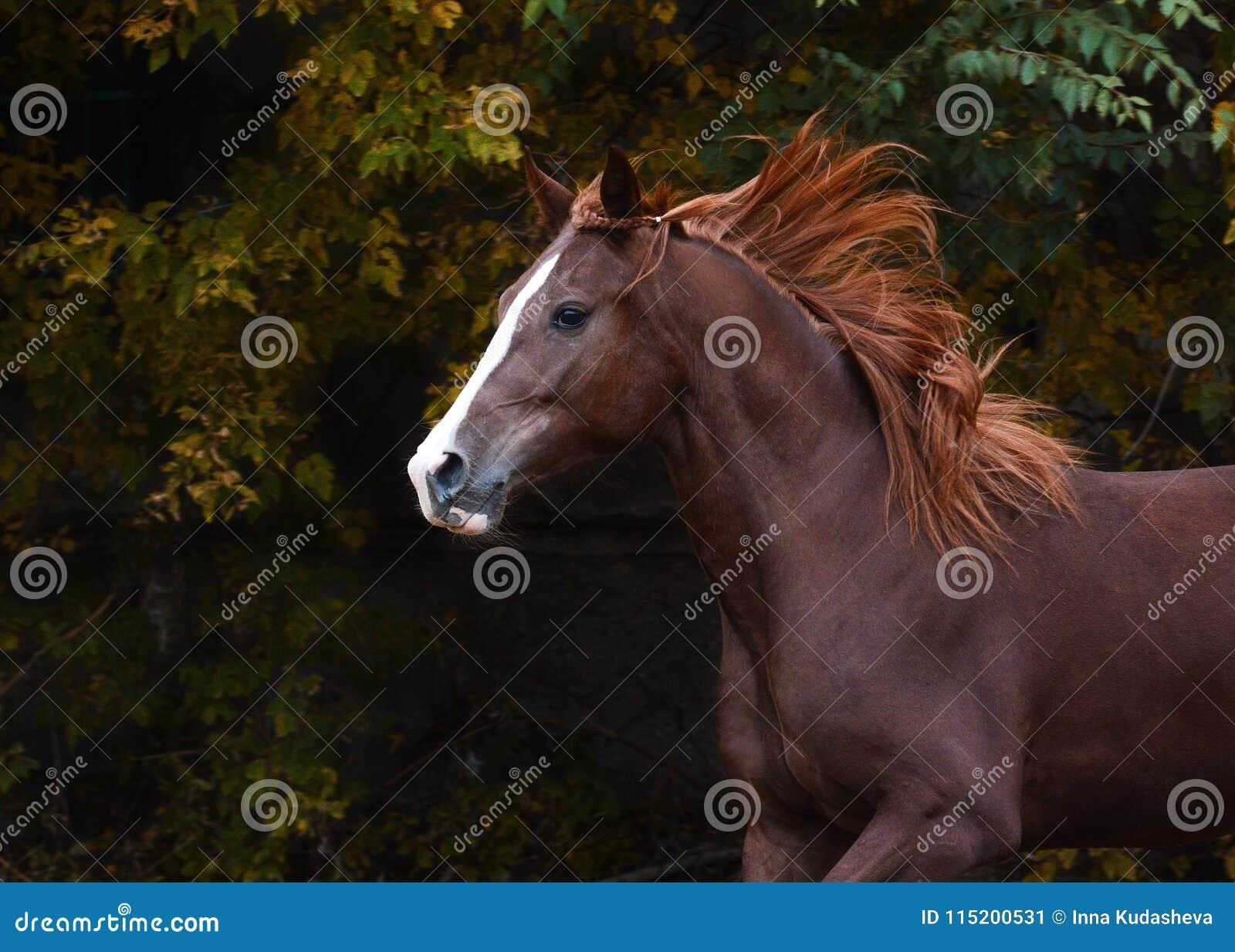 Portret van een mooi rood paard op de vrijheidsherfst