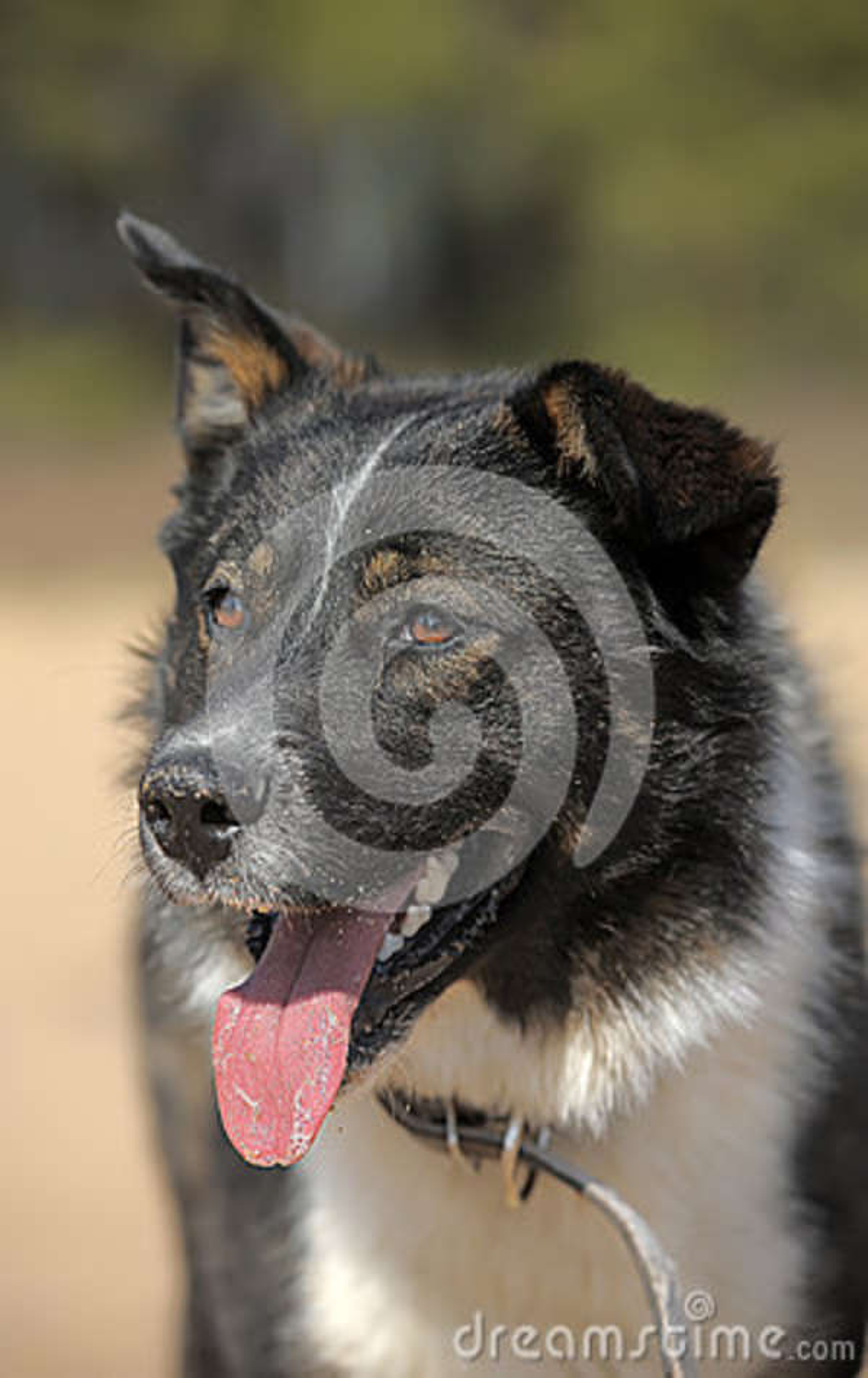Portret van een mooie hond