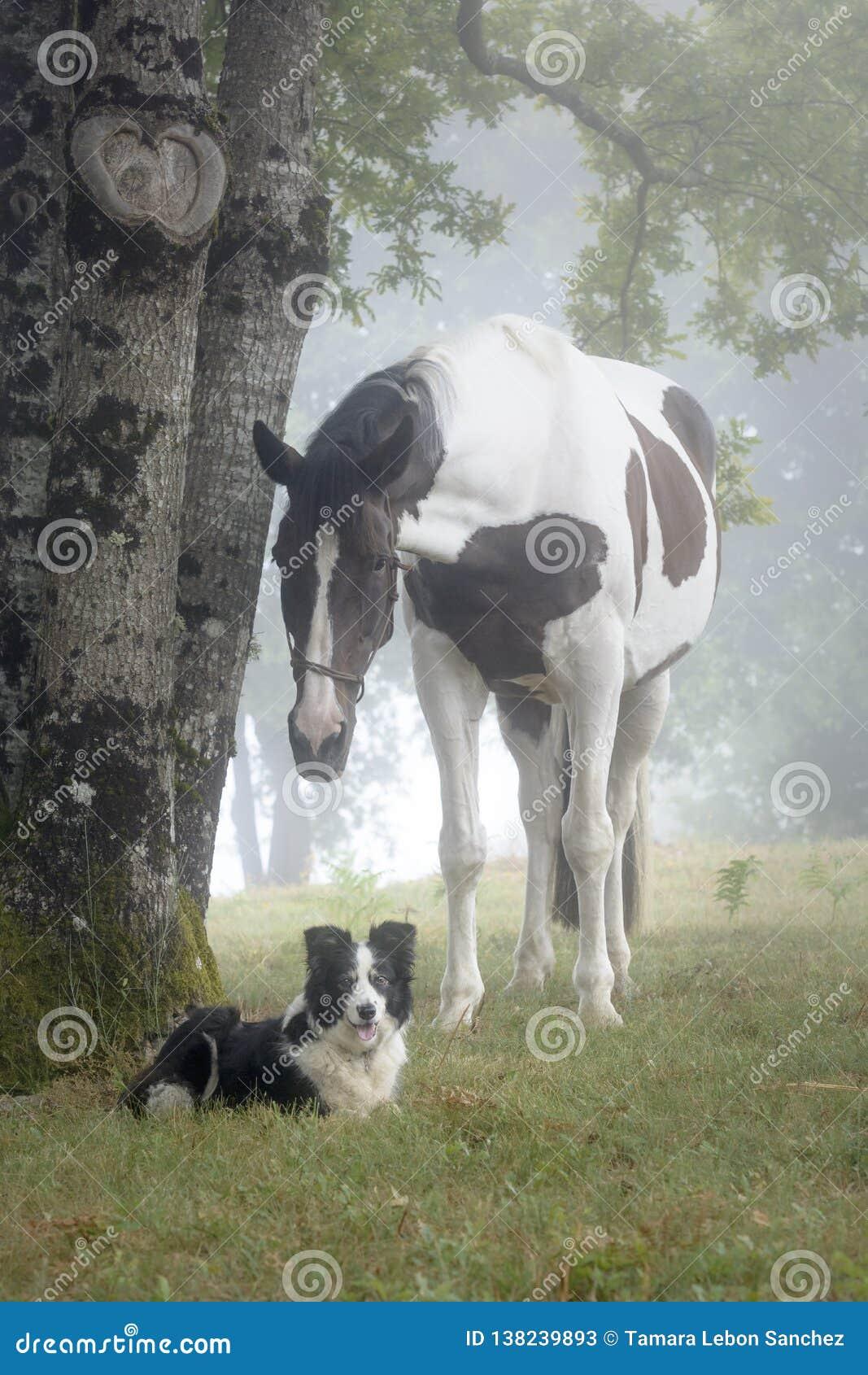 Portret van een verfpaard en een Border collie-hond in een mistig bos