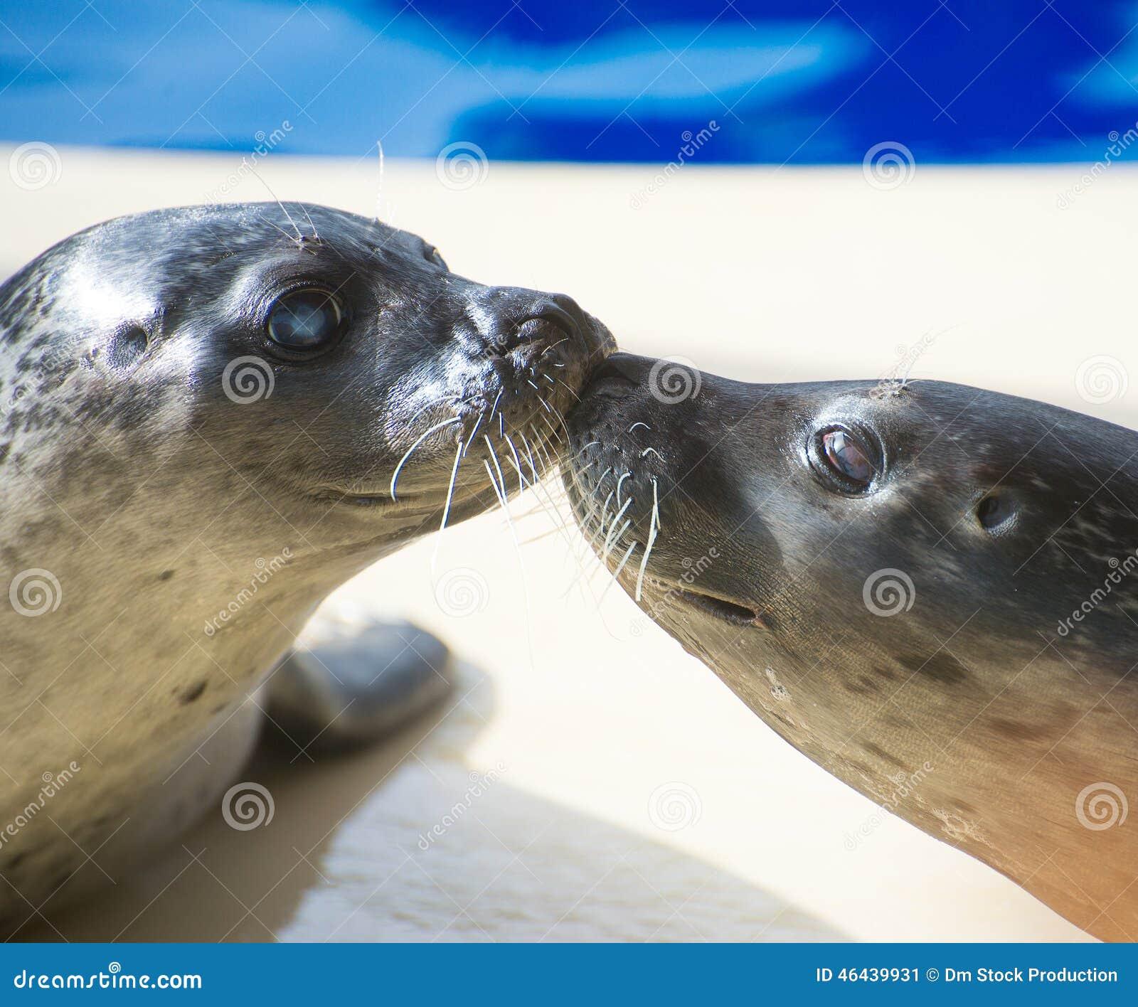 Portret van het mariene verbinding kussen