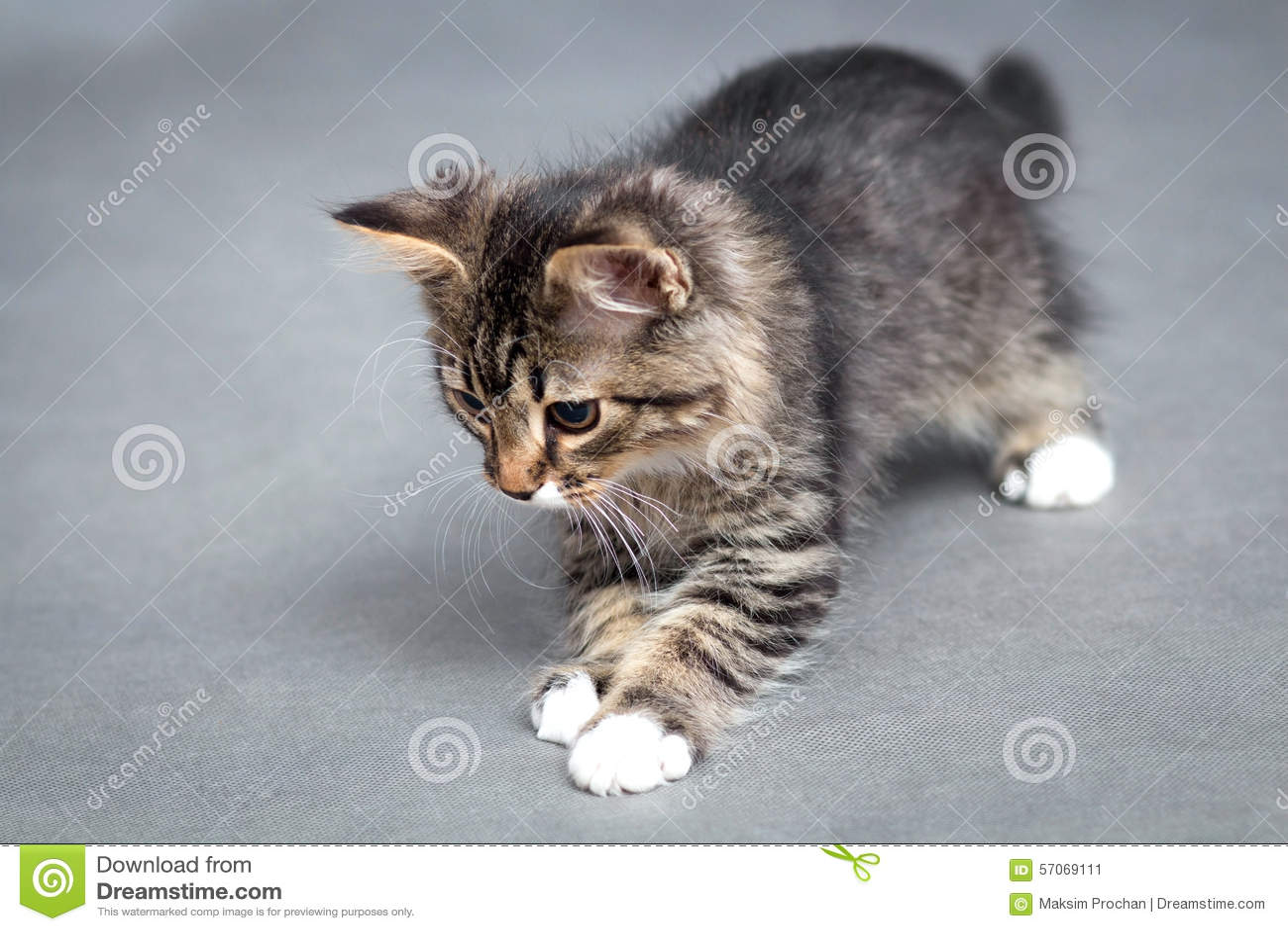Portret van het speelse katje