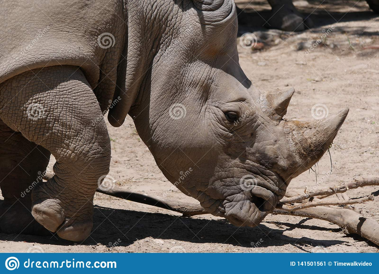 Portret van Rinoceros in onvruchtbare Habitat
