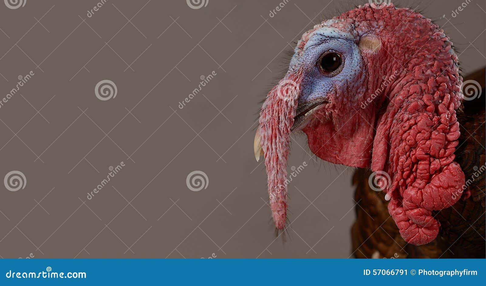Portret van Turkije