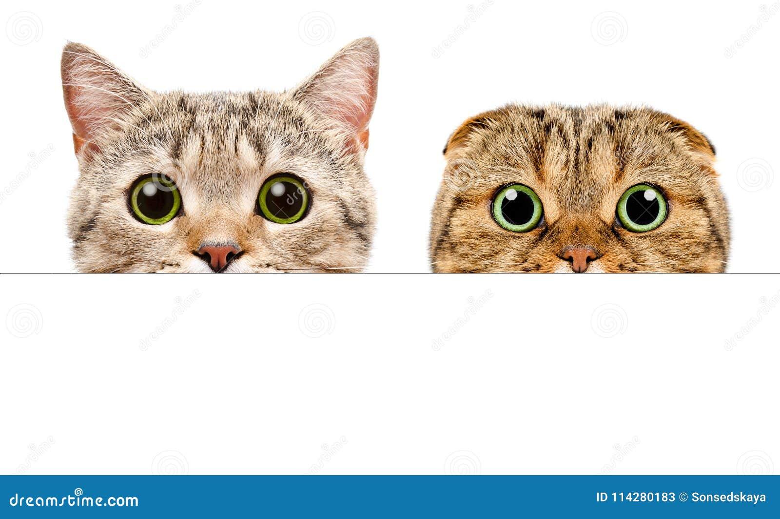 Portret van twee katten die van achter een banner gluren