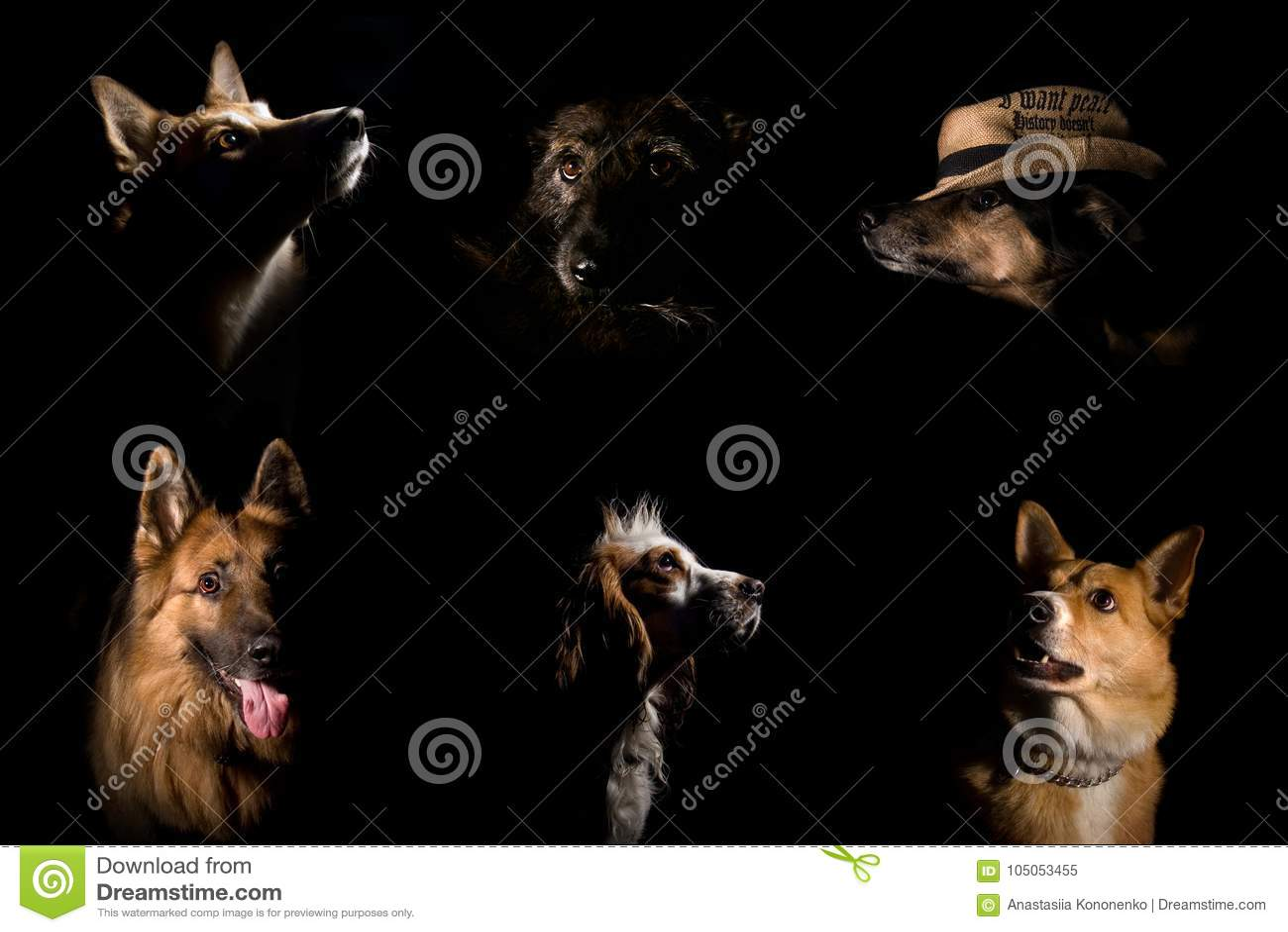 Portretten van een paar verschillende honden op een zwarte achtergrond
