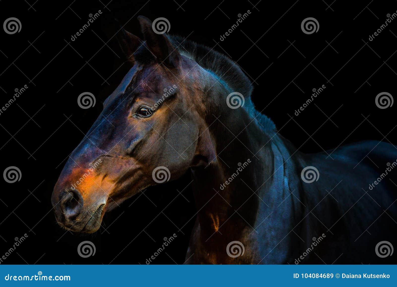 Portretten van paarden