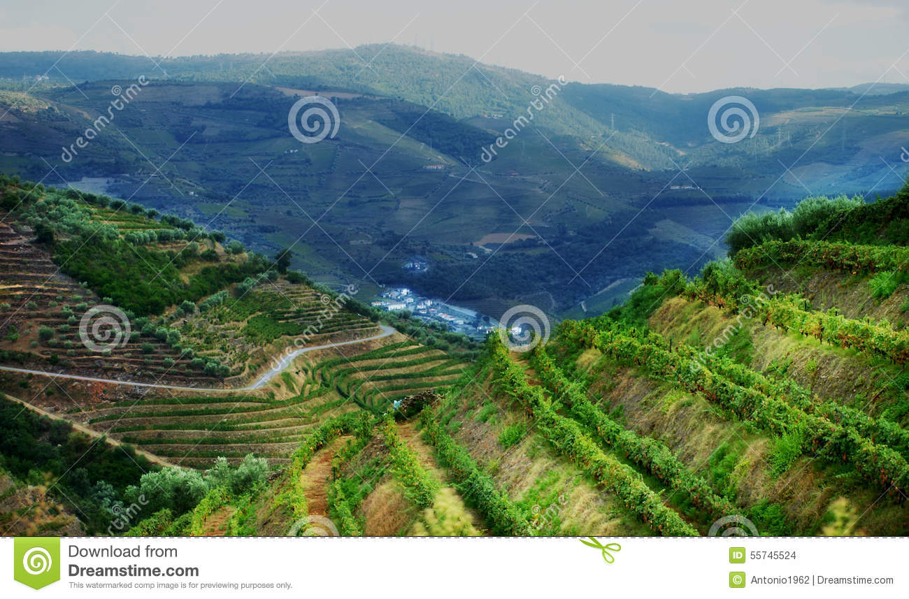 Portugal Douro Valley Vineyards Landscape Stock Photo